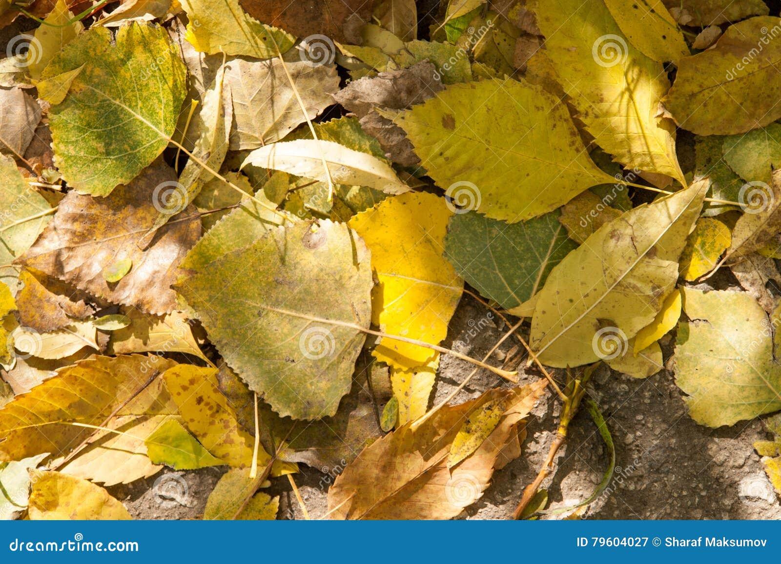 As folhas de outono amarelas e alaranjadas na queda estacionam