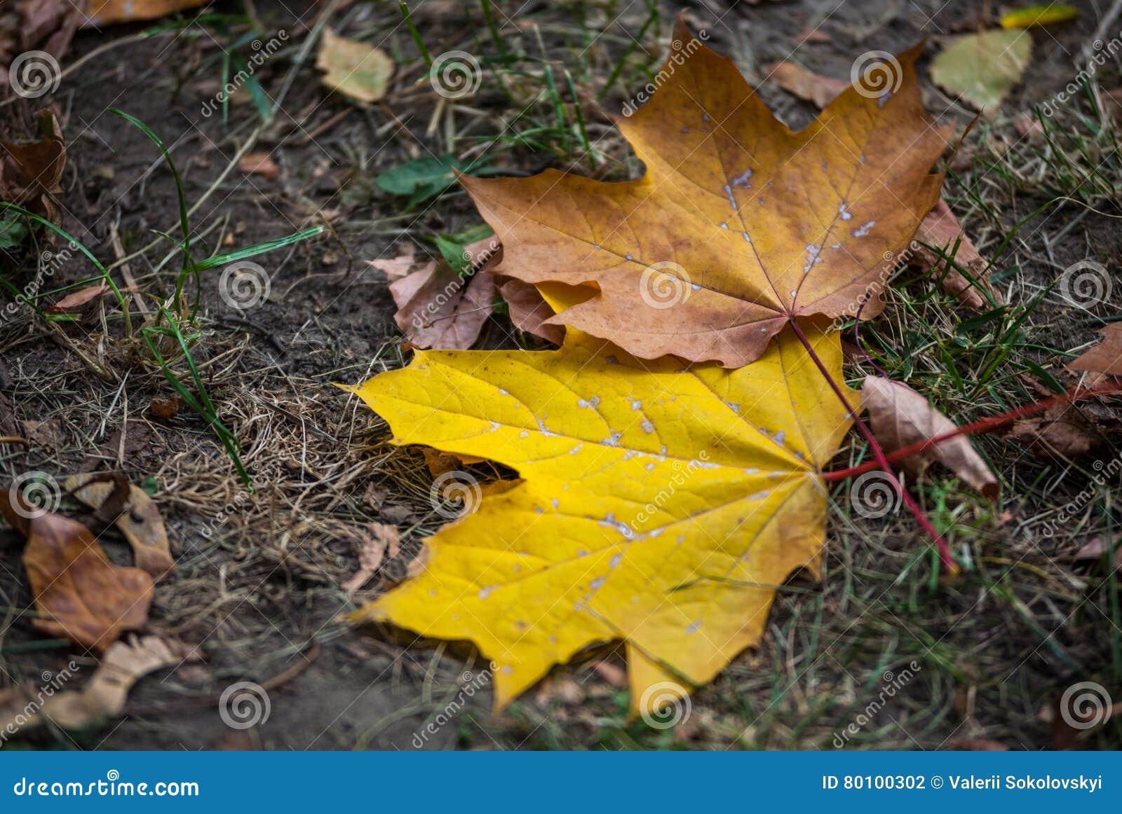 As folhas de outono encontram-se na terra no parque da cidade