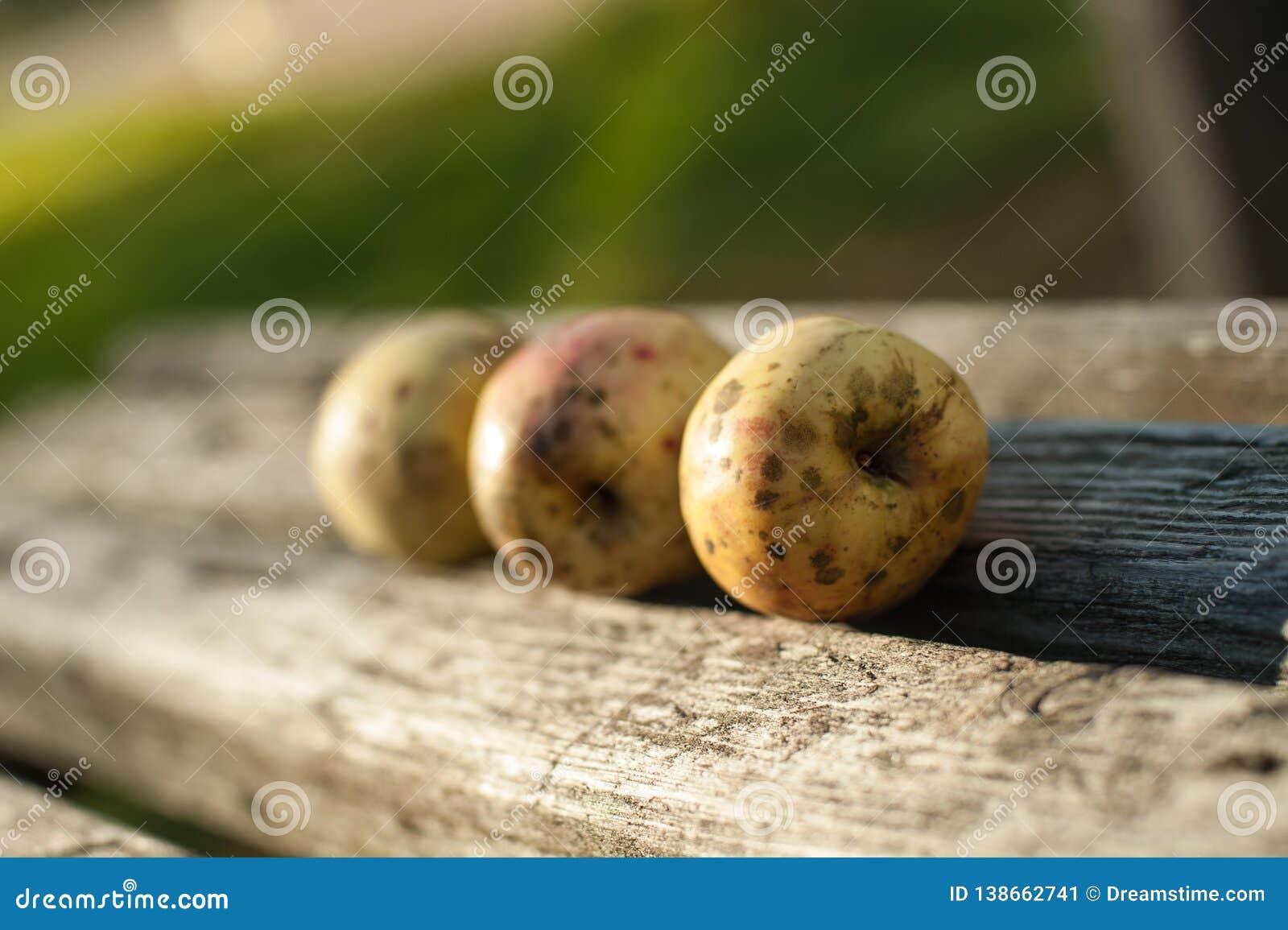 As maçãs maduras estão encontrando-se em um banco de madeira