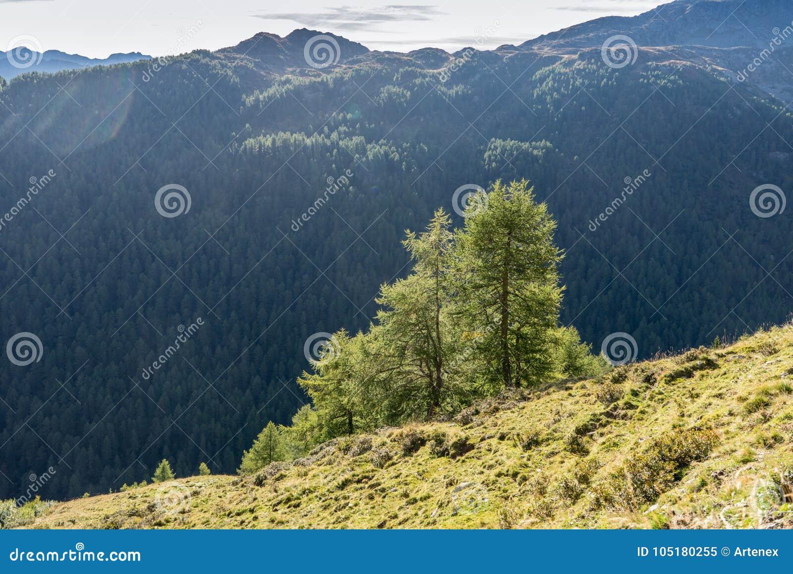As montanhas, os picos e as árvores ajardinam, ambiente natural Estrada alpina alta de Timmelsjoch