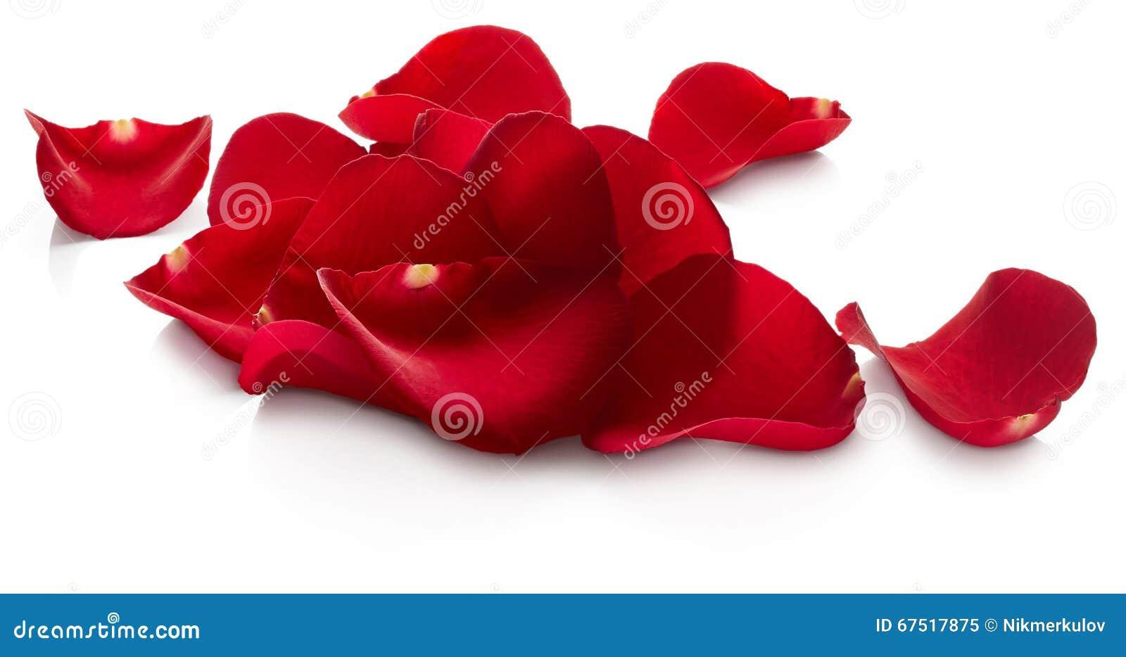 As pétalas do vermelho levantaram-se