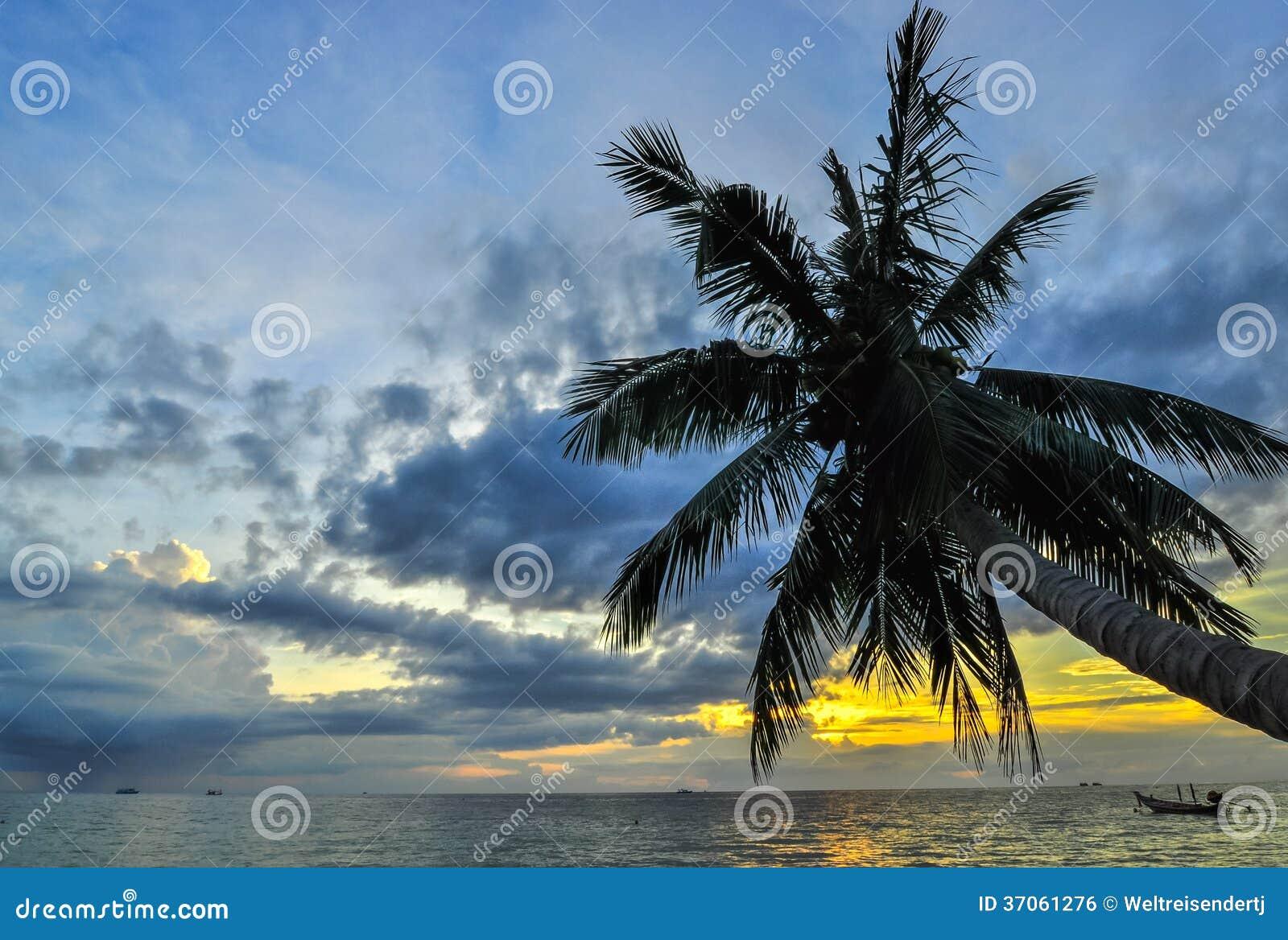 As palmas de coco na areia encalham no trópico no por do sol. Tailândia, Koh C