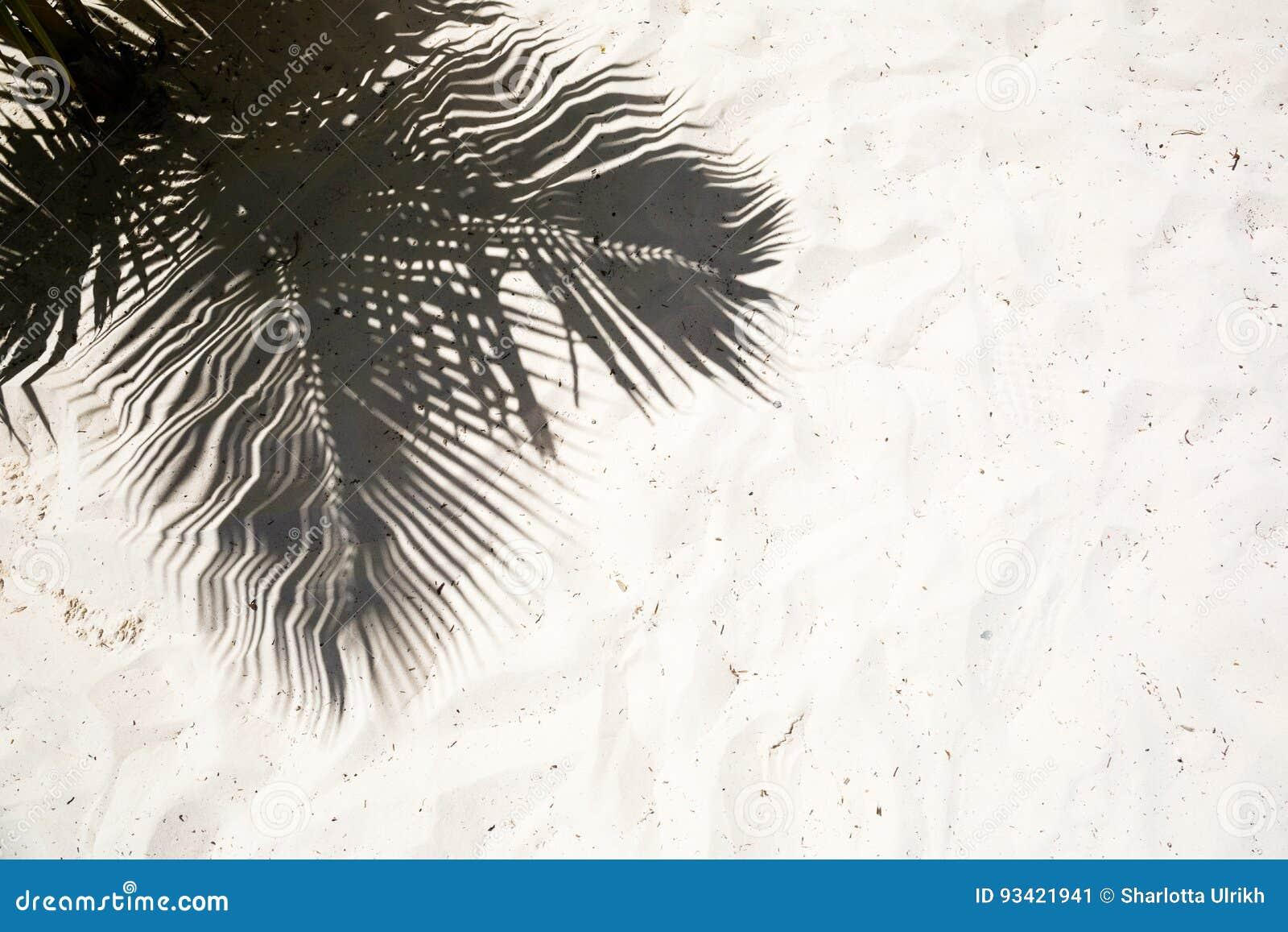 As palmeiras moldaram sombras na areia dourada lisa de uma praia tropical remota da ilha na república Dominicana
