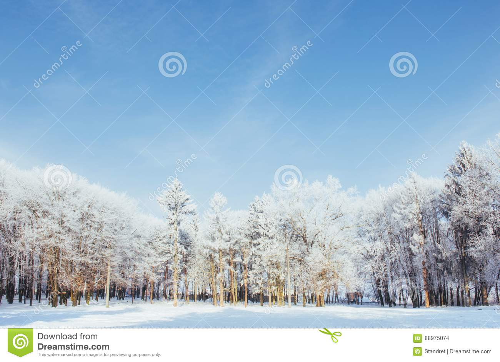 As partes superiores das árvores na neve Neve congelada em árvores Árvores congeladas em um fundo do céu nebuloso azul