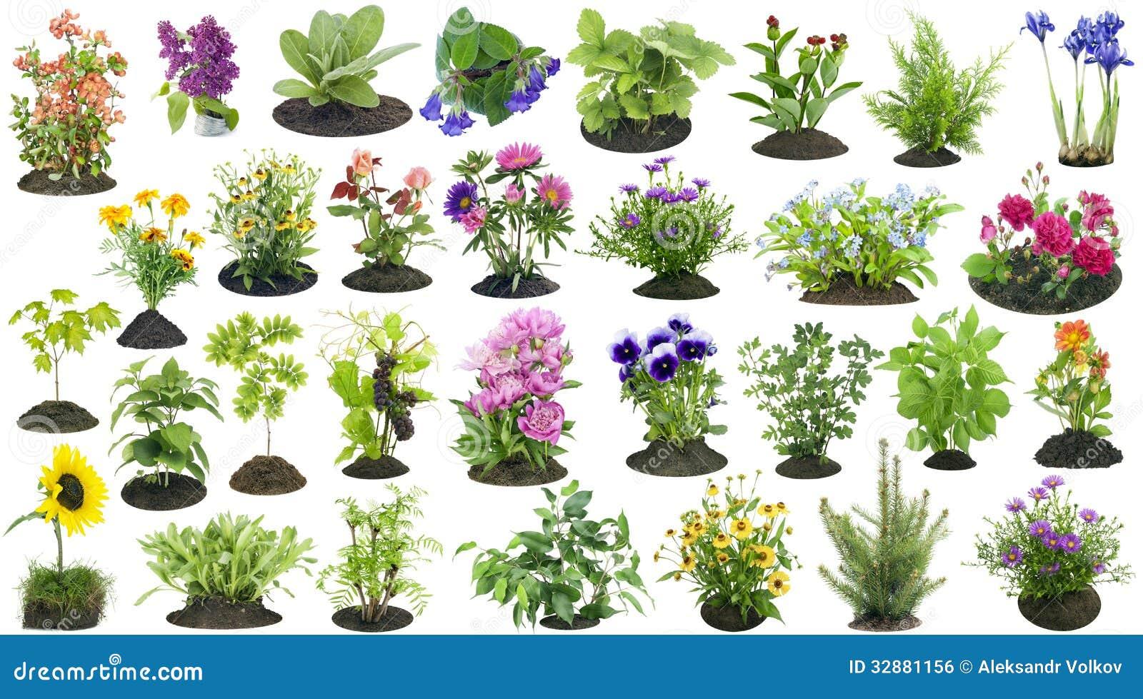 Imagem de Stock Royalty Free As plantas de jardim crescem no grupo do