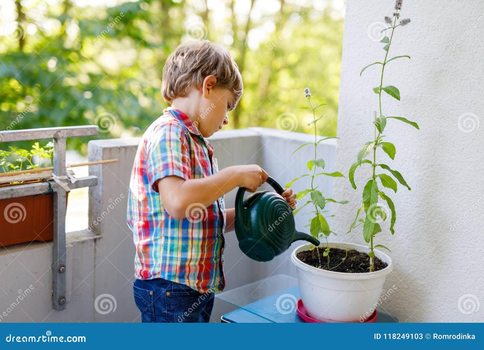 As plantas molhando do menino pré-escolar pequeno ativo da criança com água podem em casa no balcão