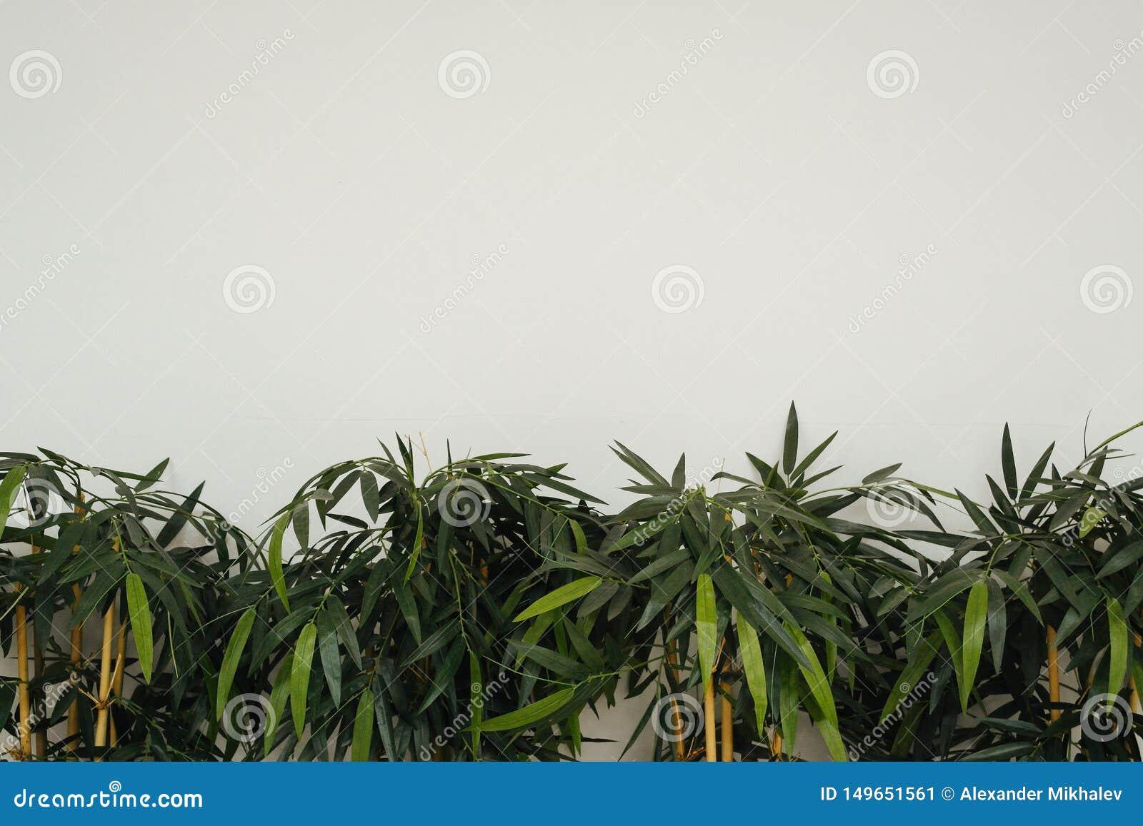 As plantas verdes em um fundo claro