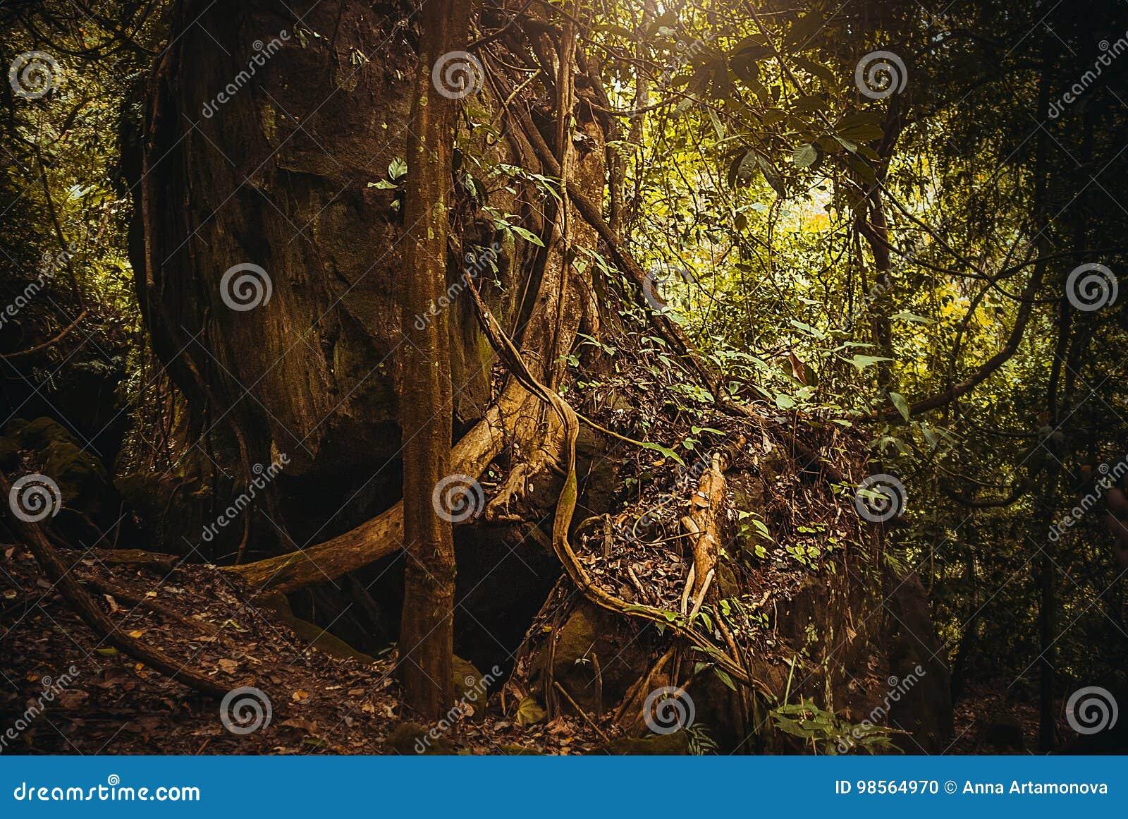 As raizes das árvores na selva Paisagem tropical da floresta úmida da floresta tropical da natureza Malásia, Bornéu, Sabah