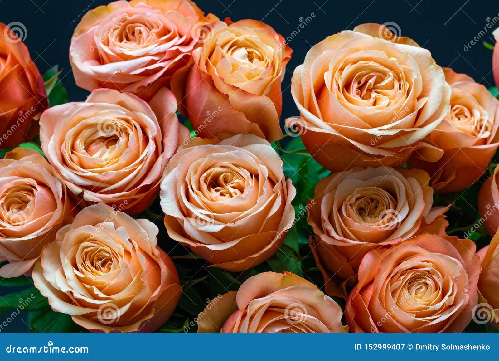 As rosas cor-de-rosa do pêssego fecham-se acima em um fundo floral do fundo escuro