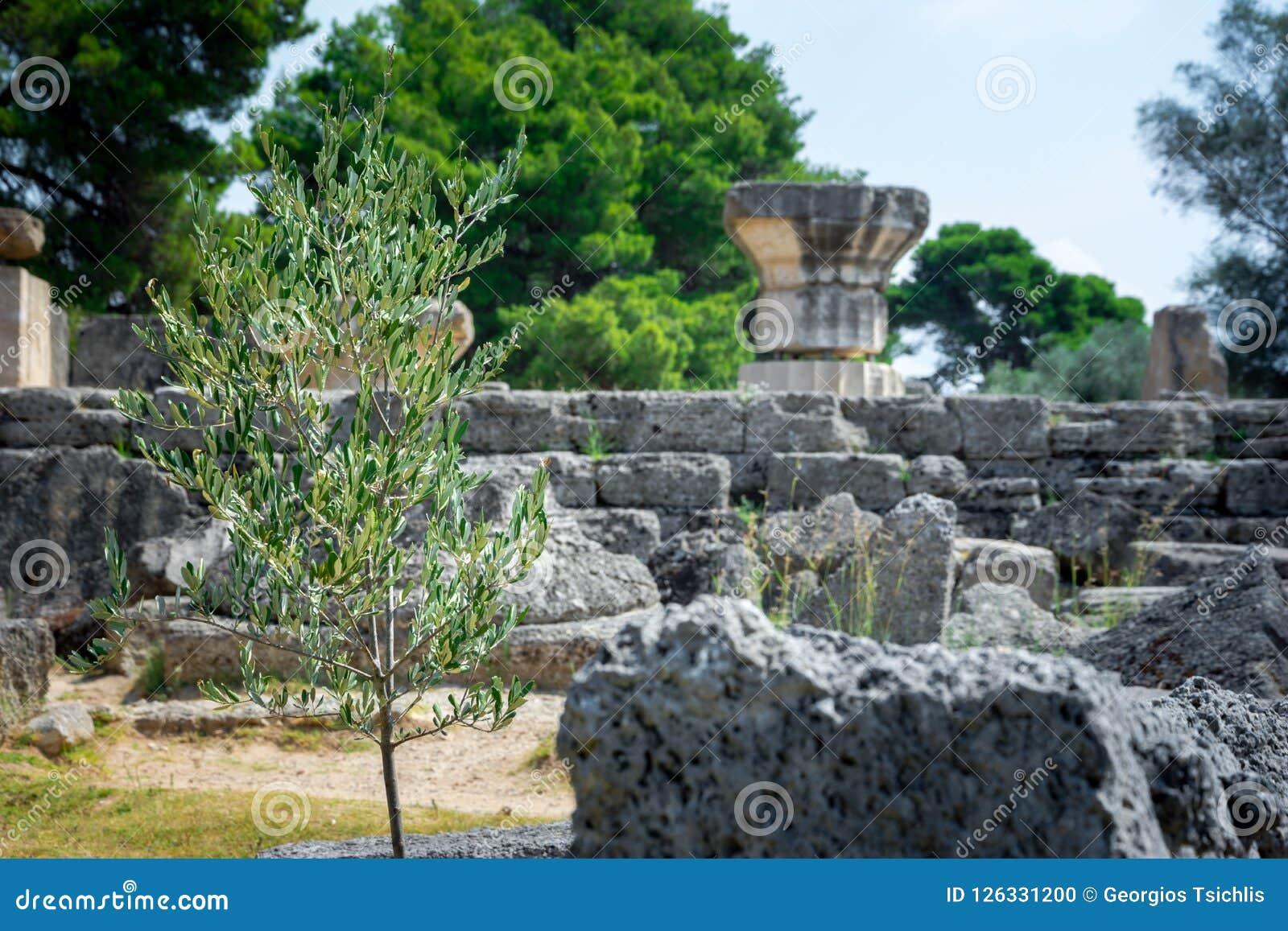 As ruínas da Olympia antiga, Grécia Ocorre aqui o toque da chama olímpica