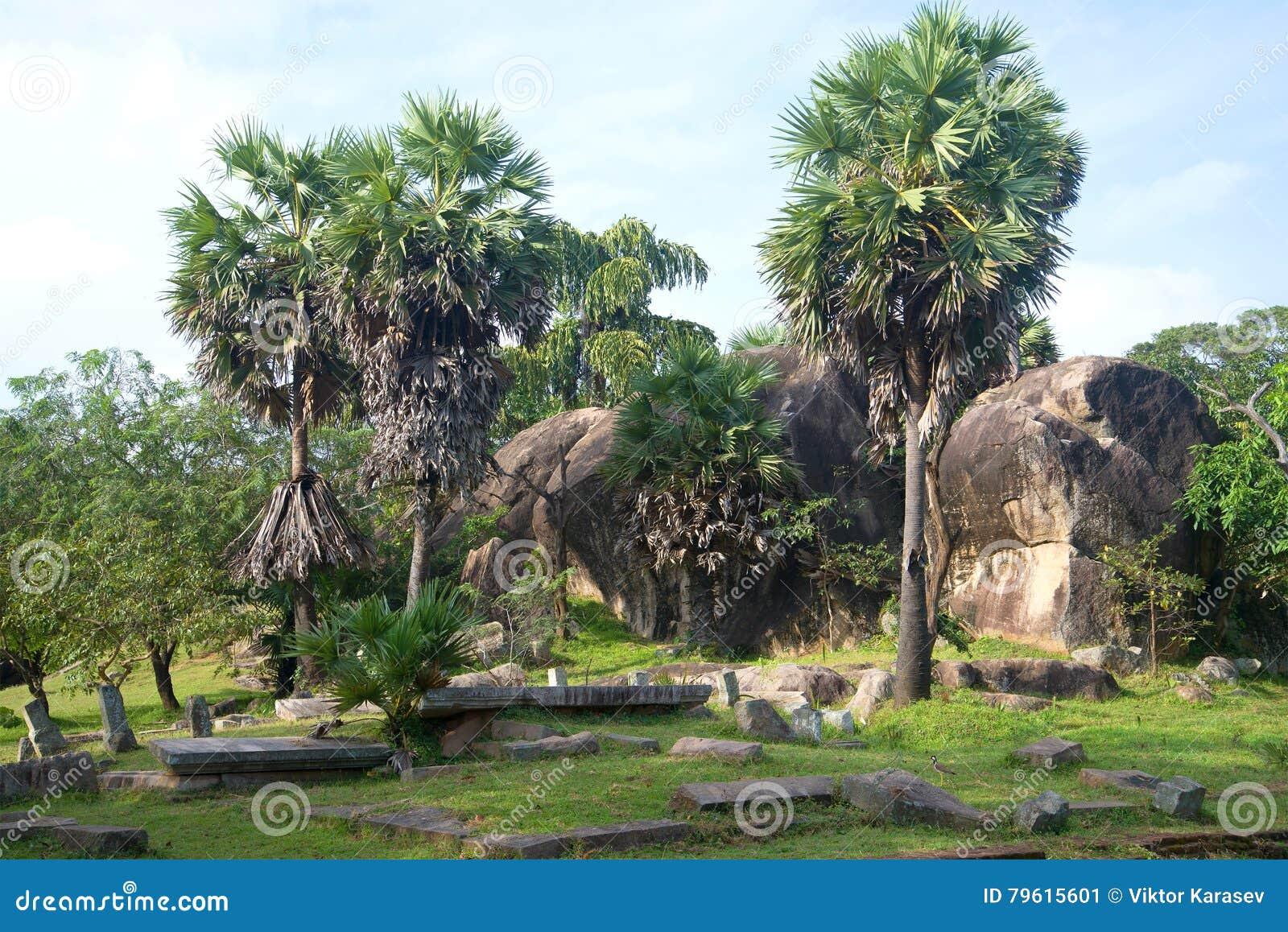 As ruínas do parque real antigo Ranmasu Uyana em Anuradhapura