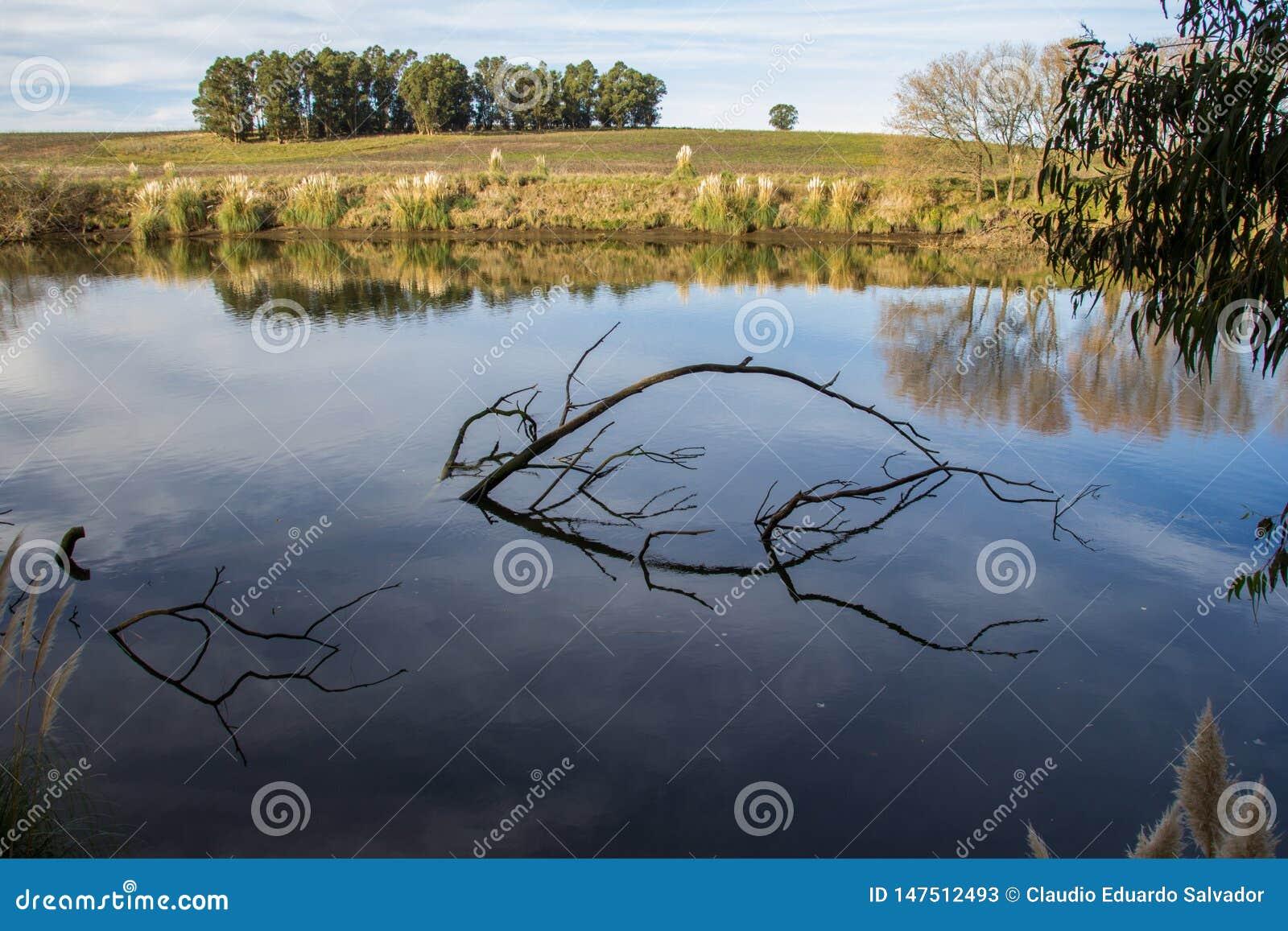 As ?rvores no banco de rio quequen grandioso