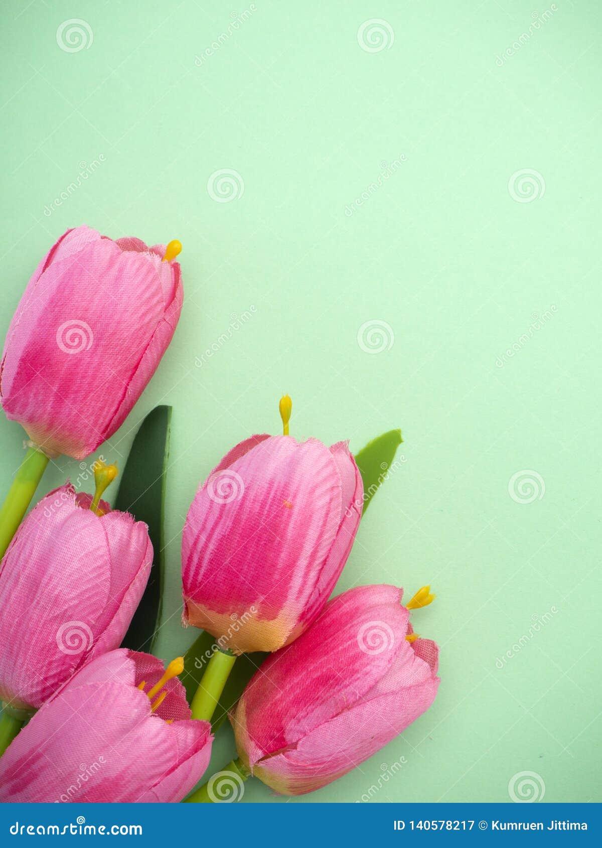 As tulipas cor-de-rosa esverdeiam o fundo do papel
