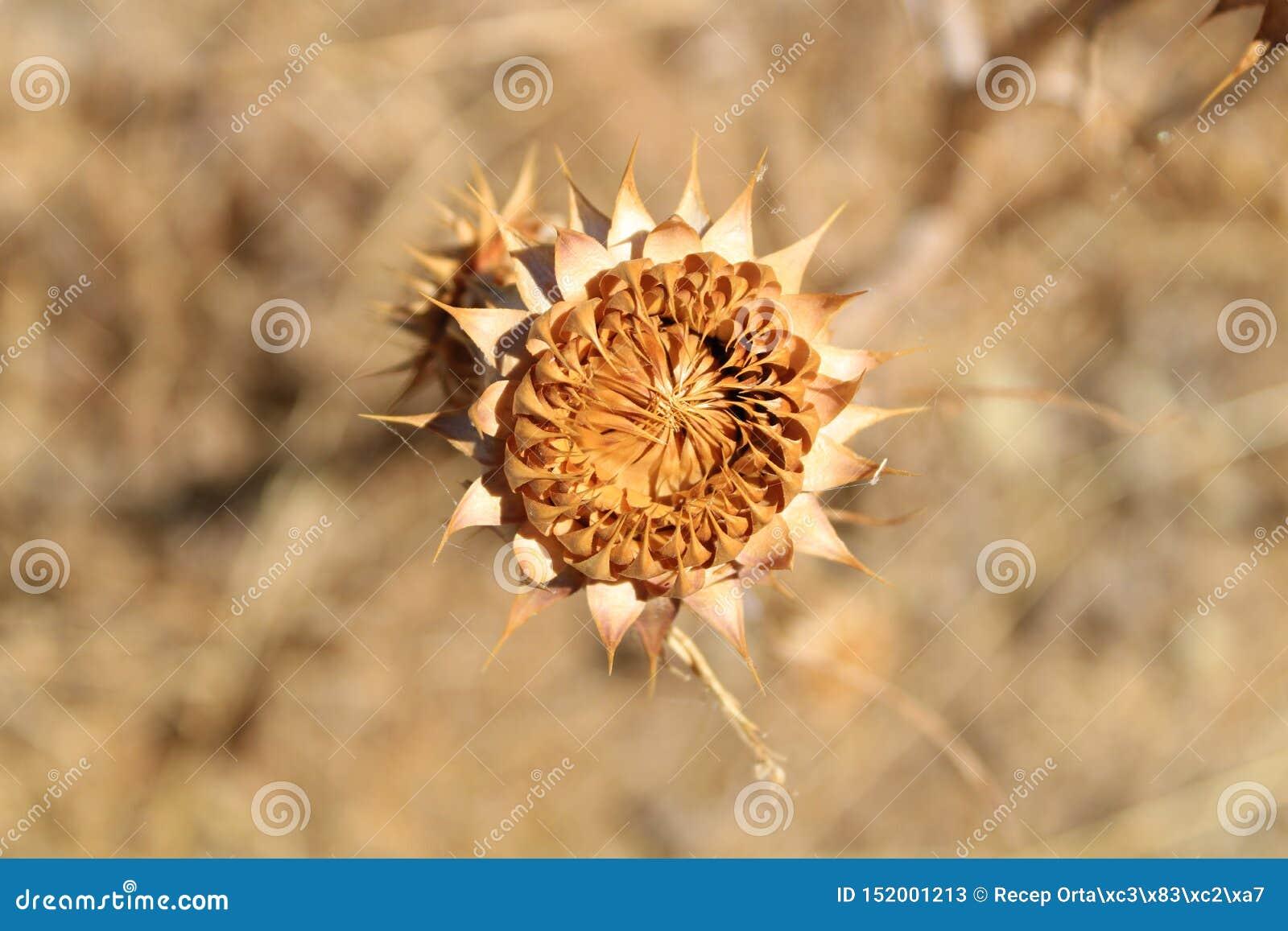 As várias plantas bonitas do verão com fundo dos espinhos são borrão