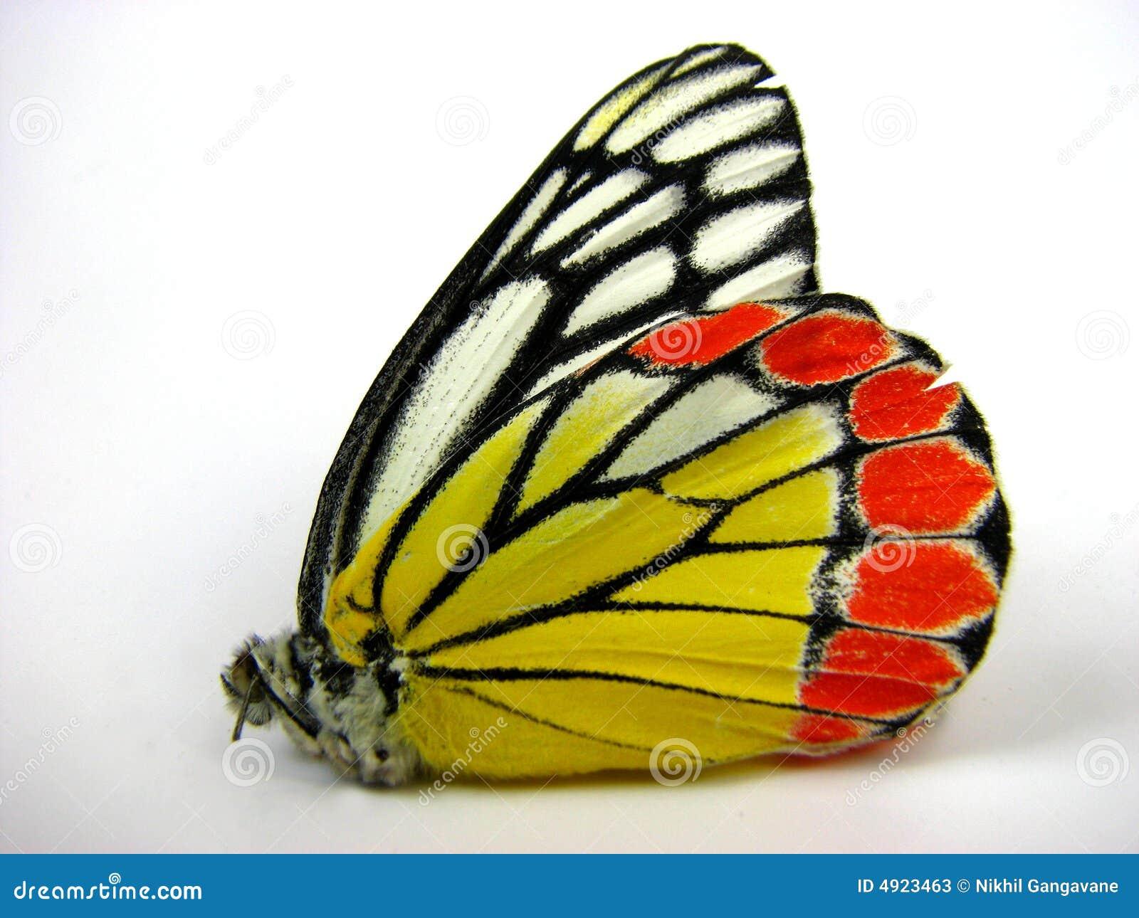 Asa da borboleta