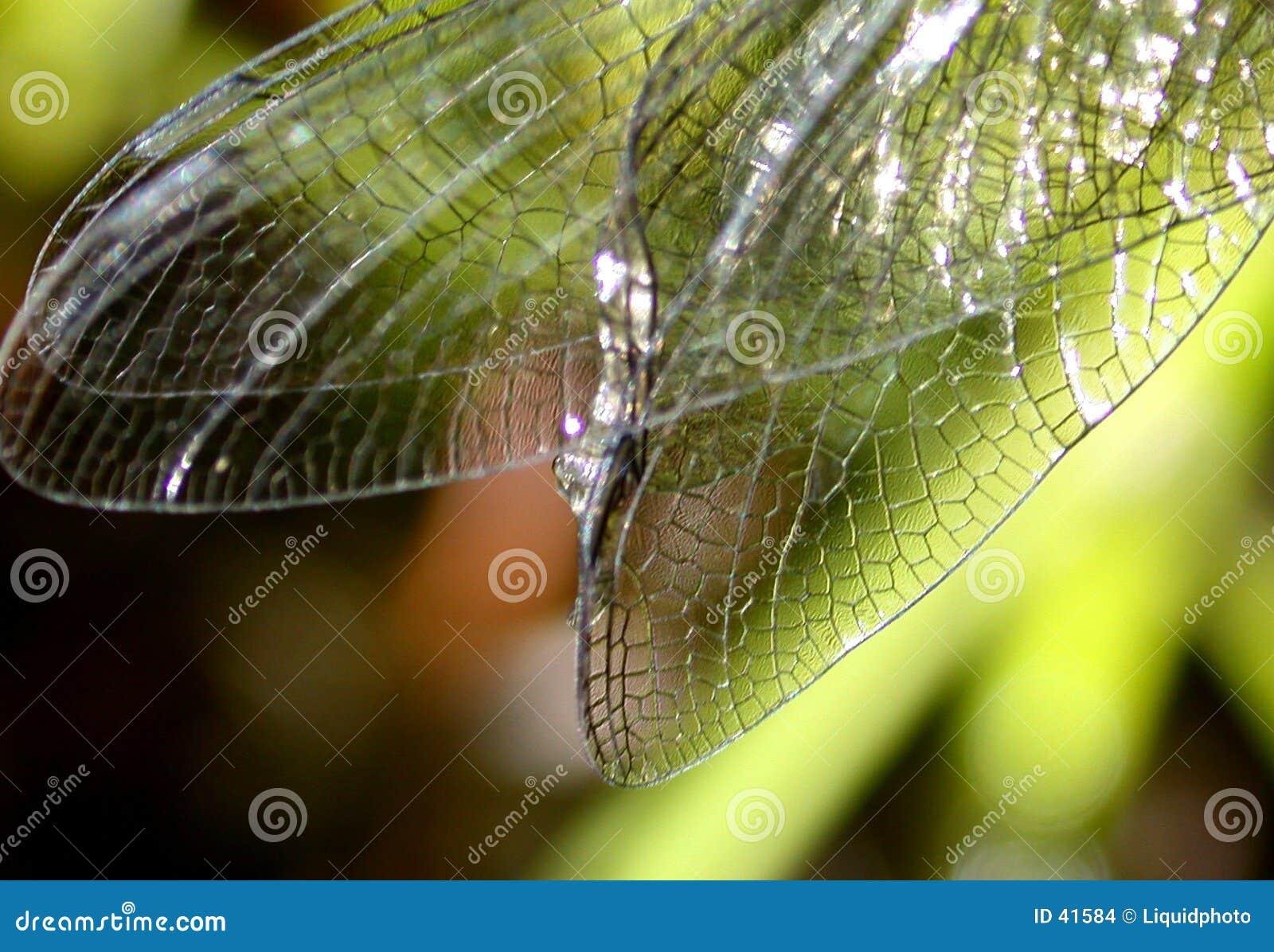 Asas da libélula