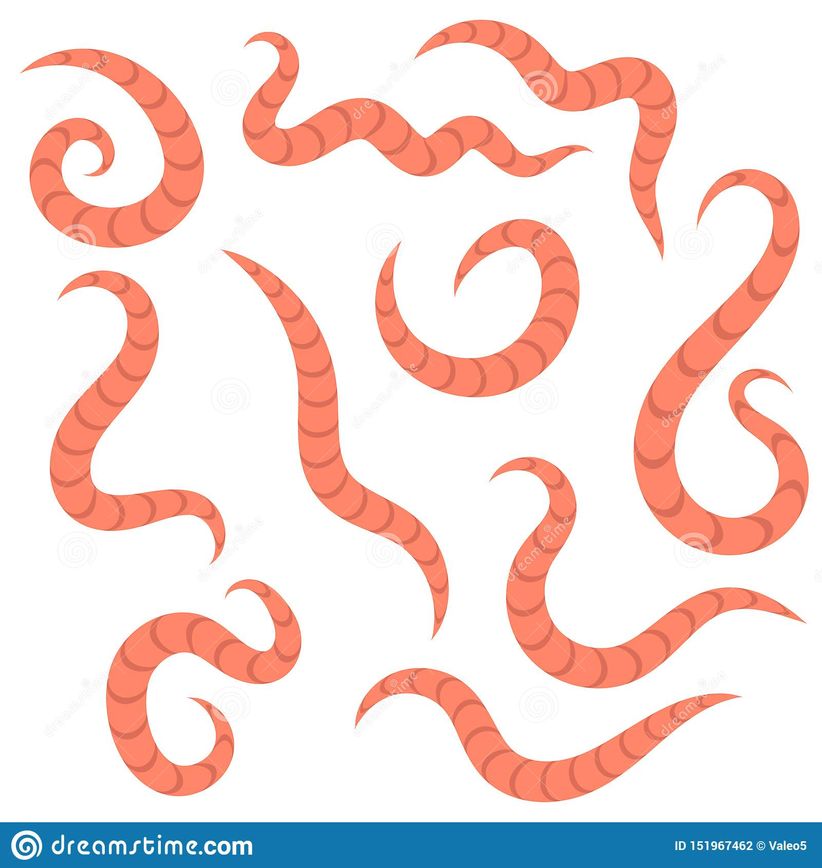 A pinworms parazitizmusának helye
