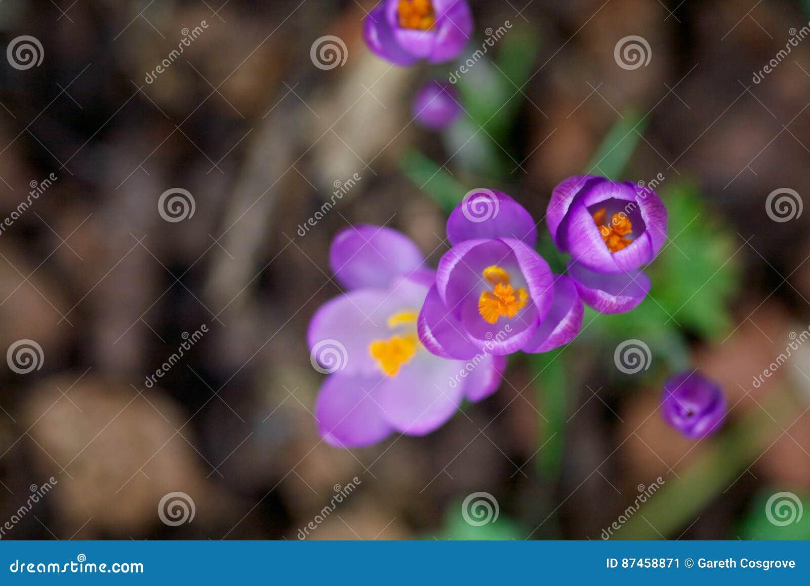 Ascendente próximo da flor