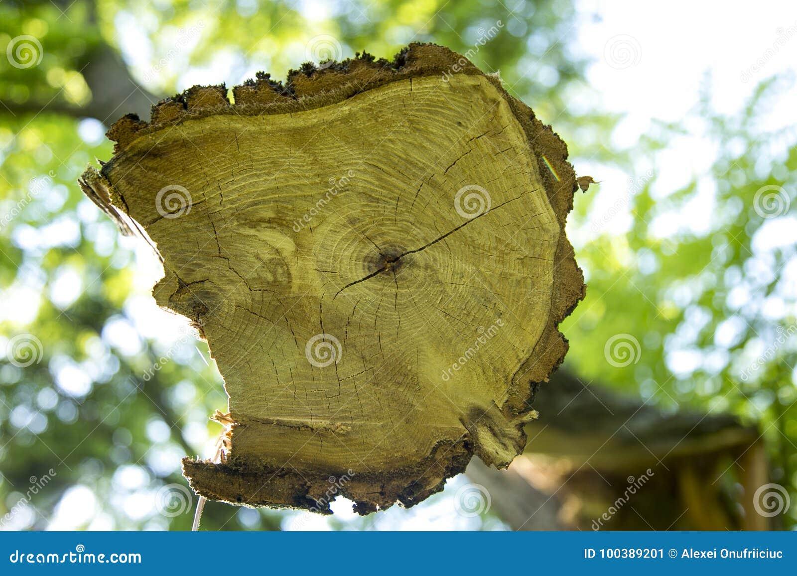 Aserrar un árbol