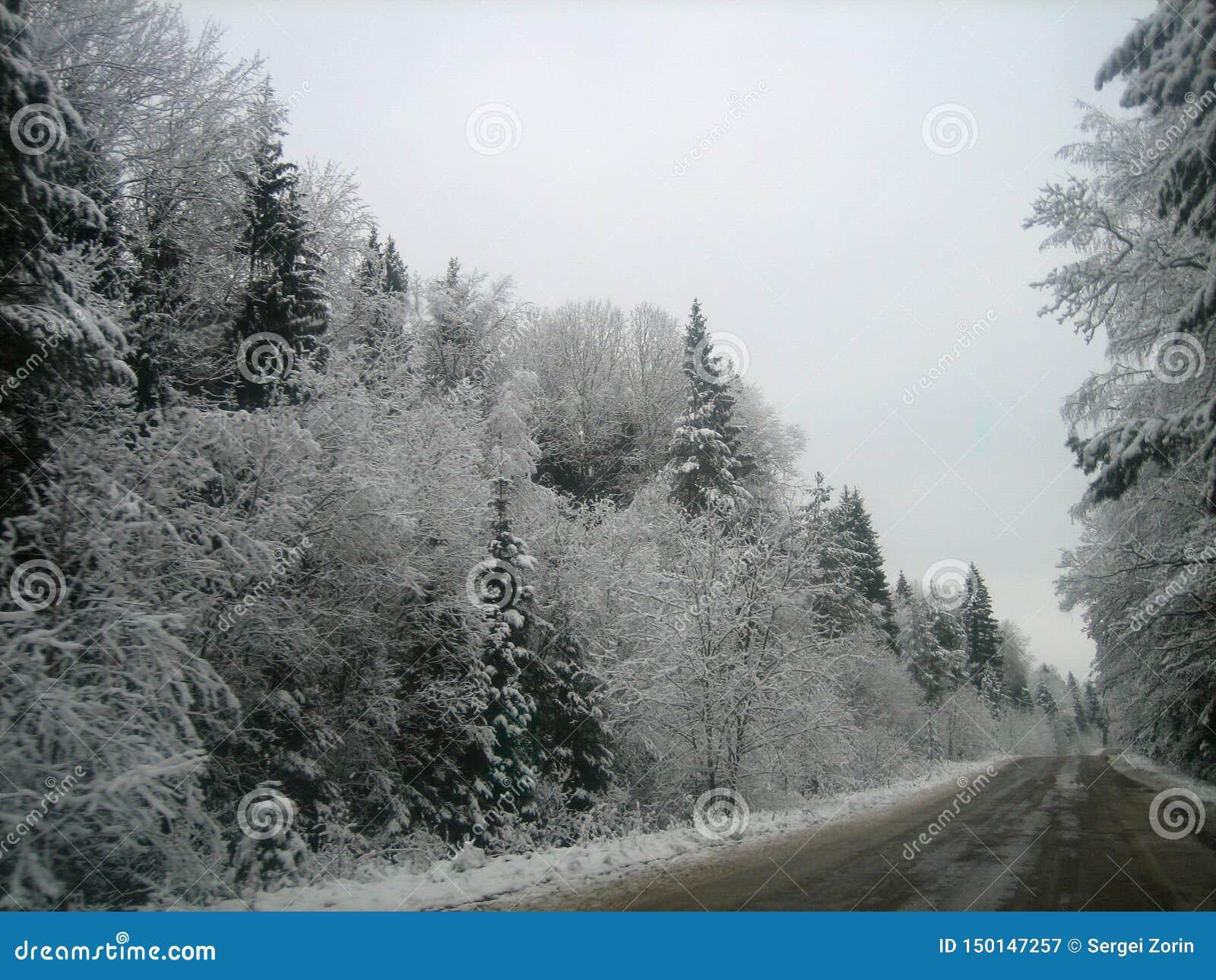 Asfaltowa droga w głębokim lesie na mokrym zima dniu