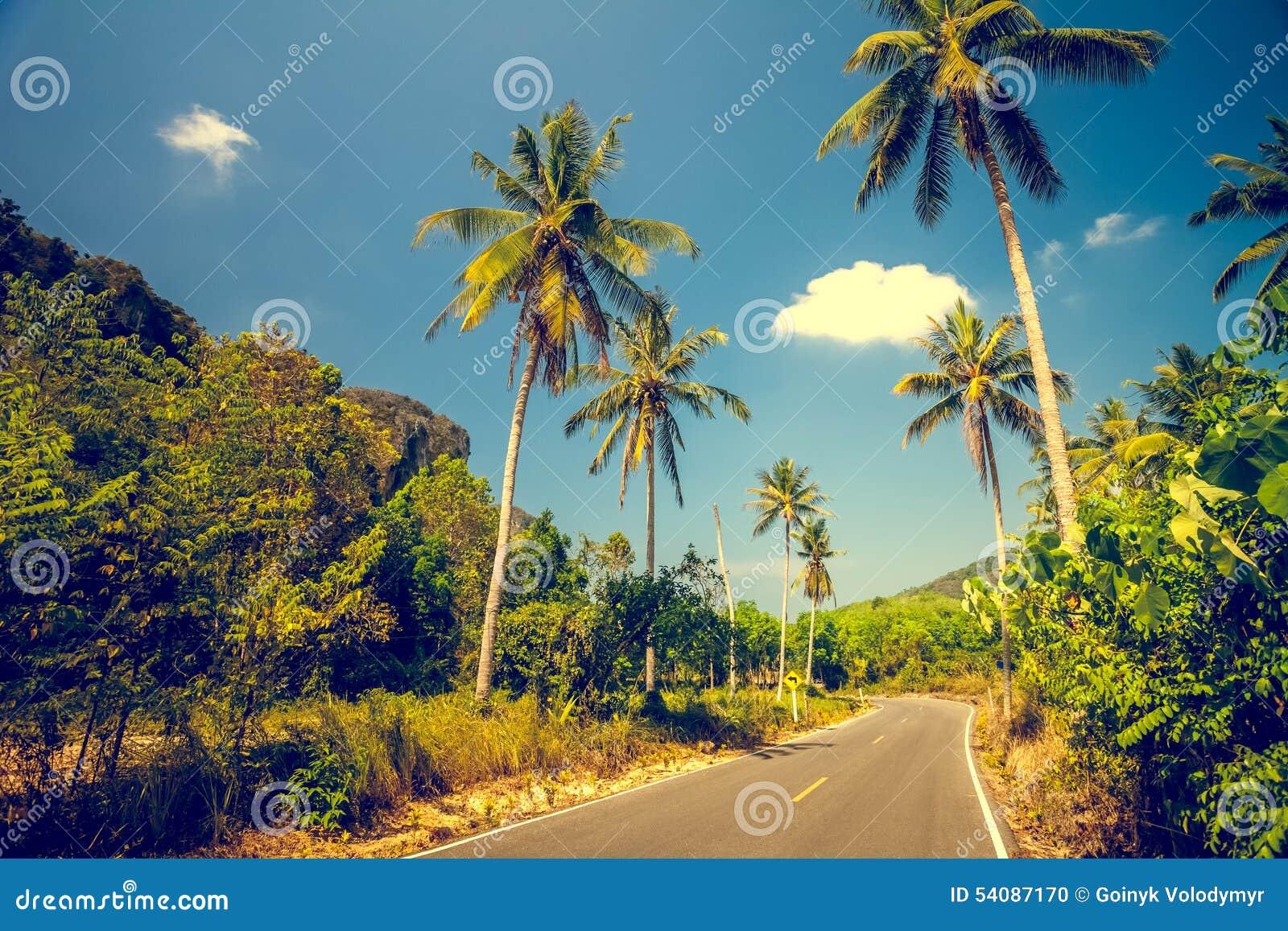 Asfaltweg met palmen