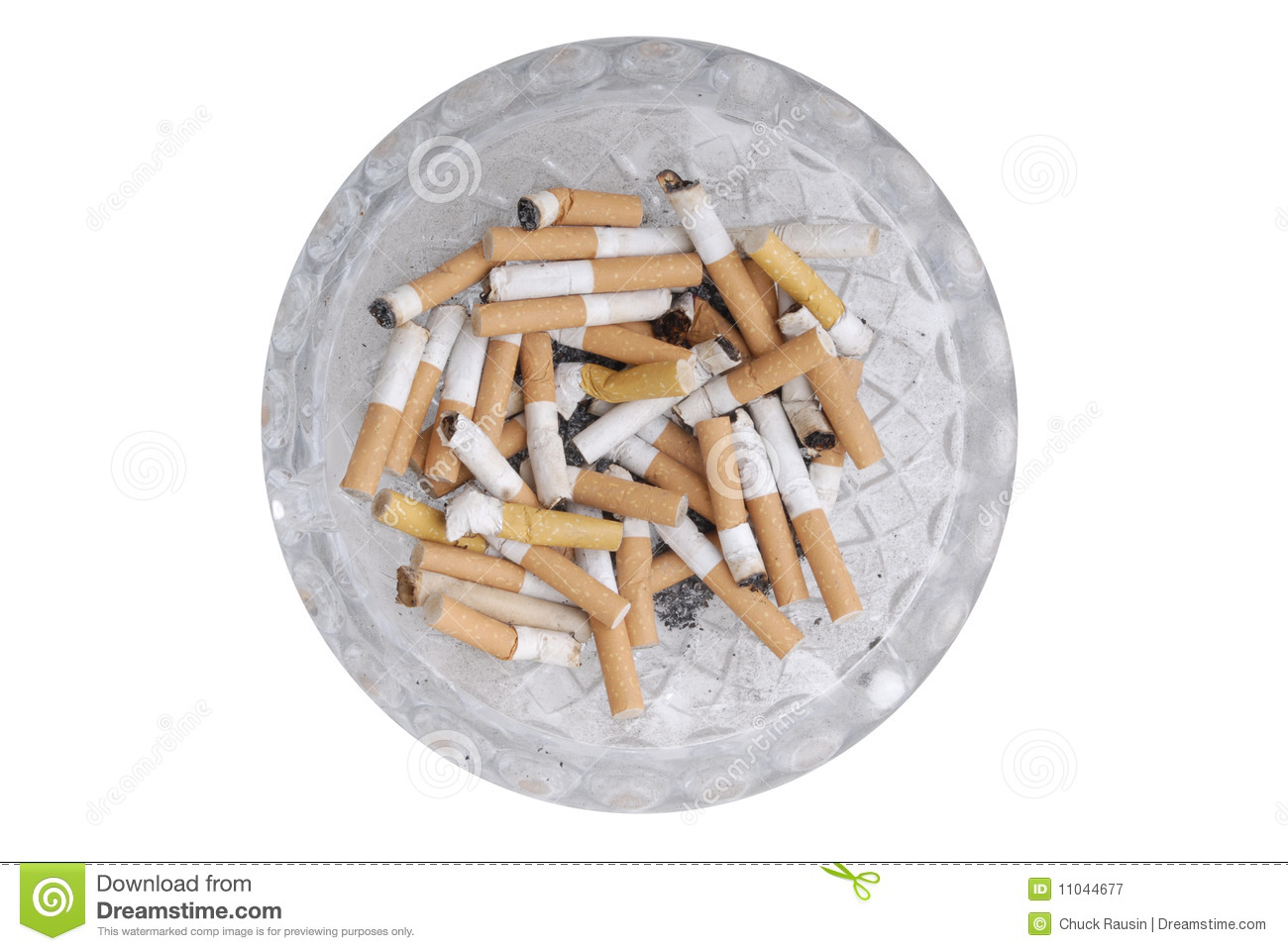 Feasibility of Cigarette Butts and Garlic as Insecticide Essay Sample