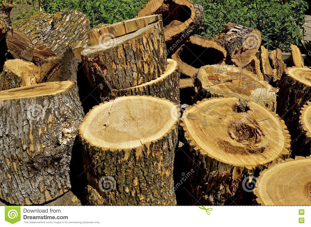 Ash tree cut into sections for future firewood stock image