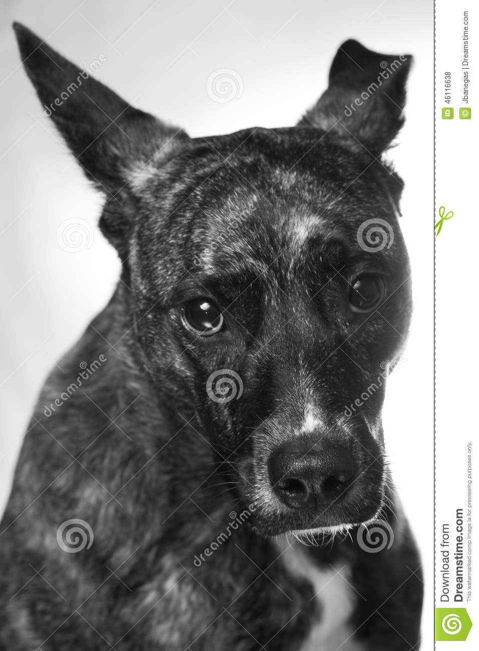 ashamed dog related keywords ashamed dog long tail