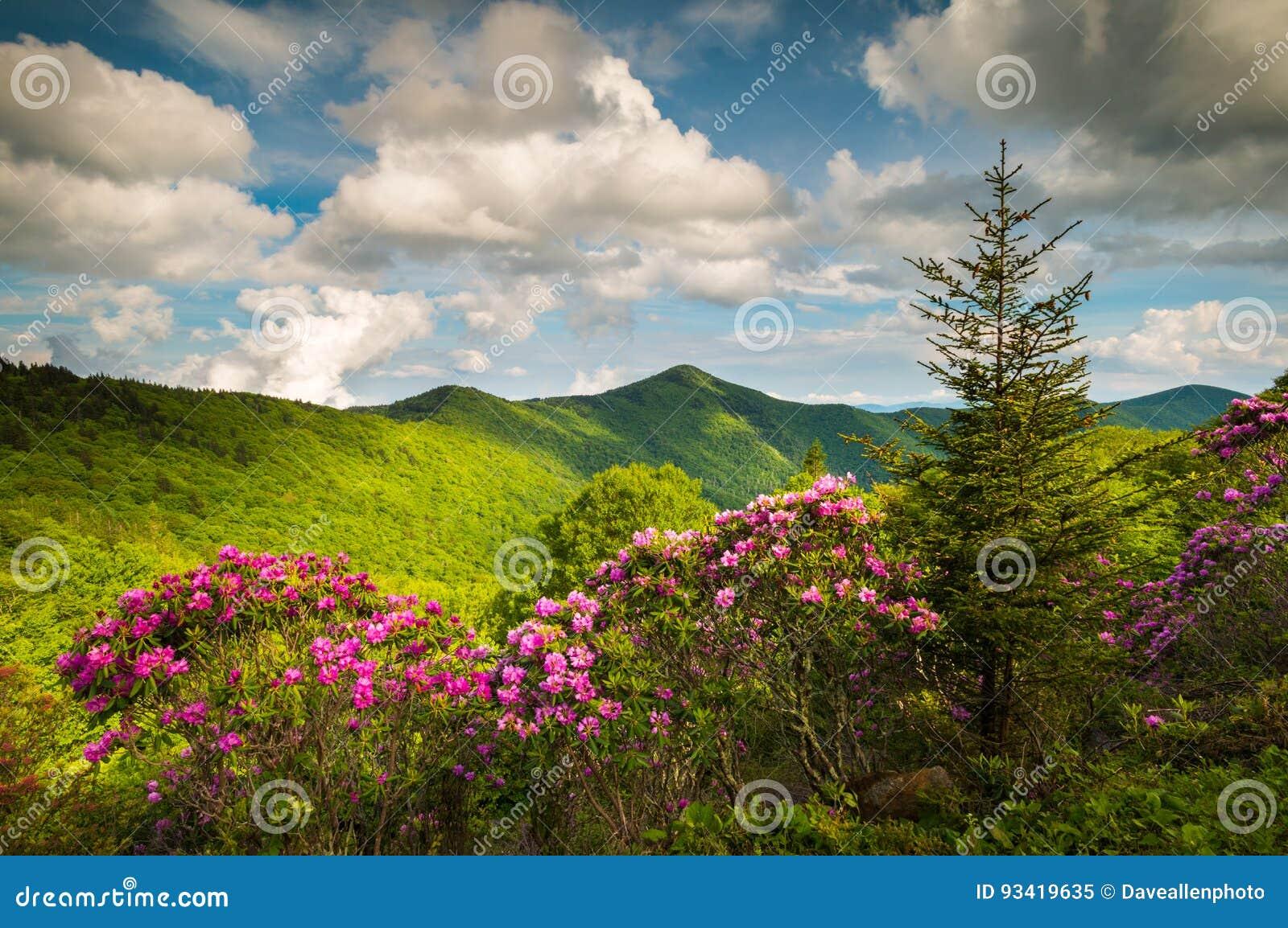 Asheville north carolina blue ridge parkway spring flowers sceni download asheville north carolina blue ridge parkway spring flowers sceni stock image image of natural mightylinksfo