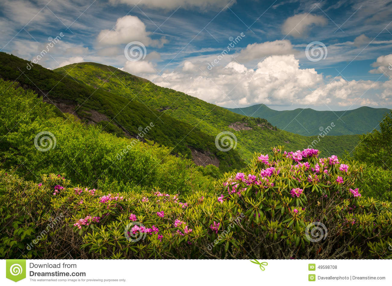Asheville north carolina blue ridge parkway spring flowers sceni royalty free stock photo download asheville north carolina blue ridge parkway spring flowers dhlflorist Image collections