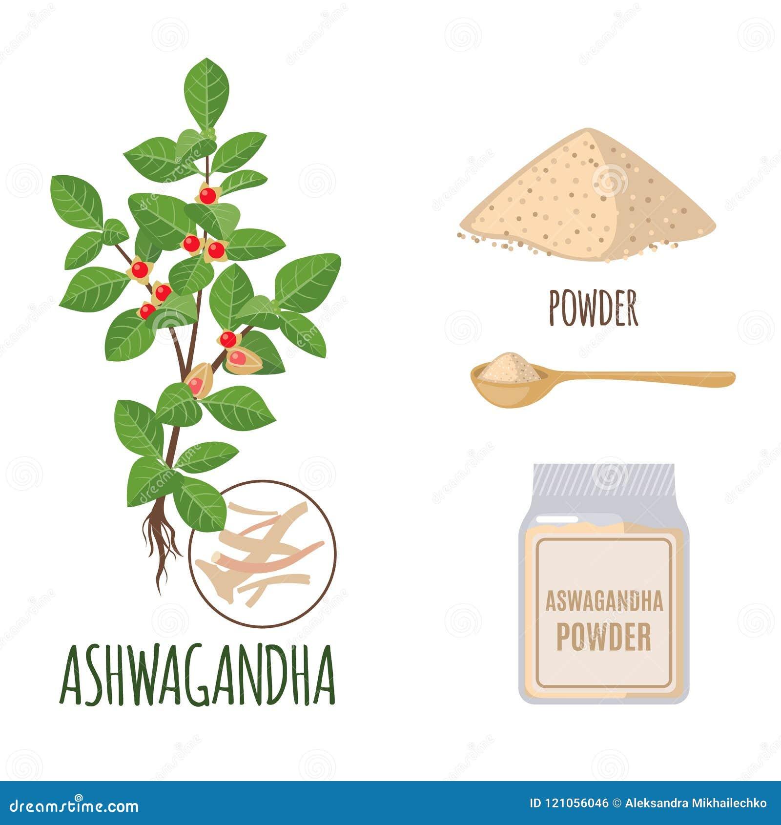 Ashwagandha met poeder en wortels in vlakke die stijl wordt op wit wordt geïsoleerd geplaatst dat