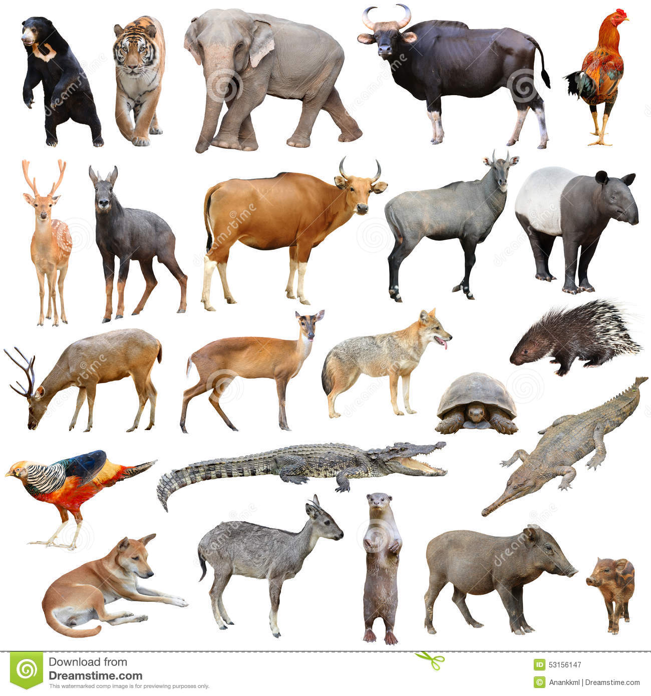 asia animals isolated stock image image of banteng crocodile clipart pictures Duck Clip Art
