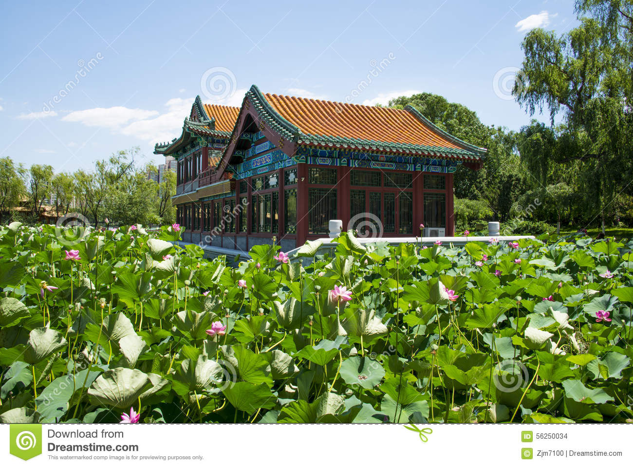 Lotus 700 300 pixels louts flower pinterest for Terraces opening times