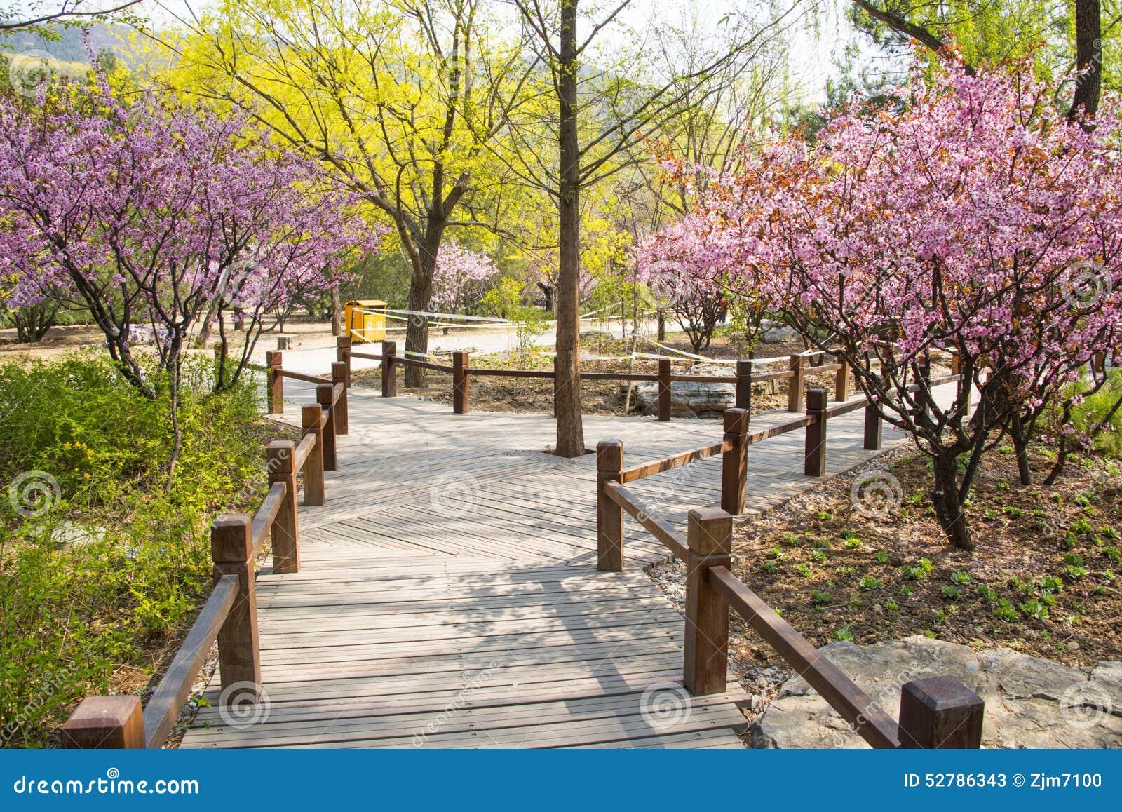 Flower gardens wallpaper - Asia Chinese Beijing Botanical Garden Spring Scenery The