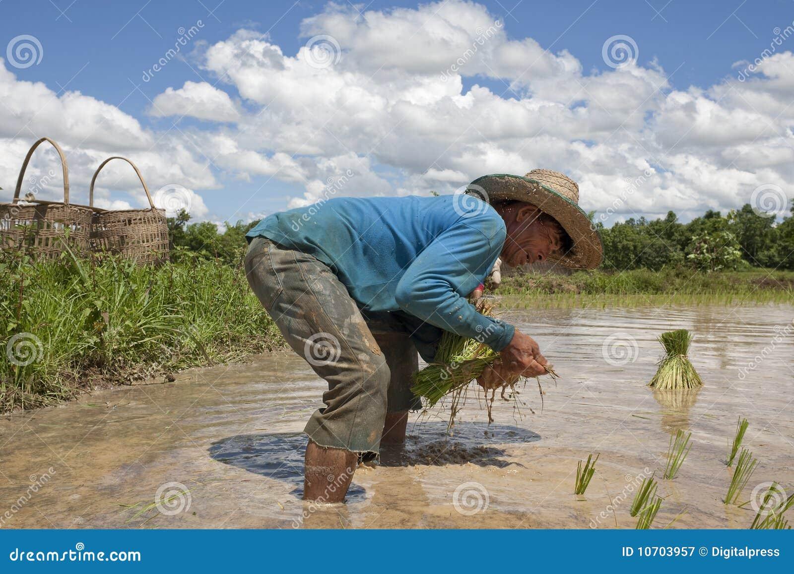 Asia pola mężczyzna irlandczyka pracy