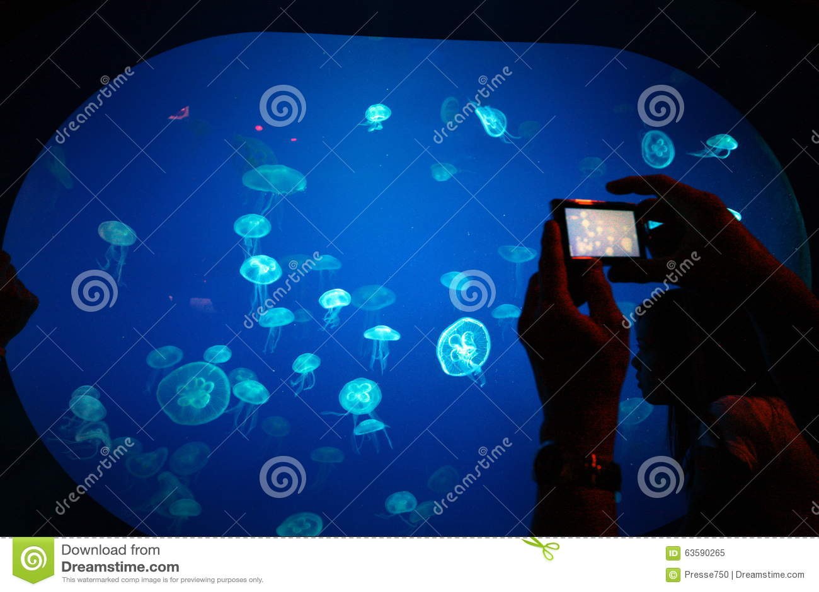 Fish aquarium in sentosa - Asia Singapore City Sentosa Underwater World Jelly Fish Editorial Image