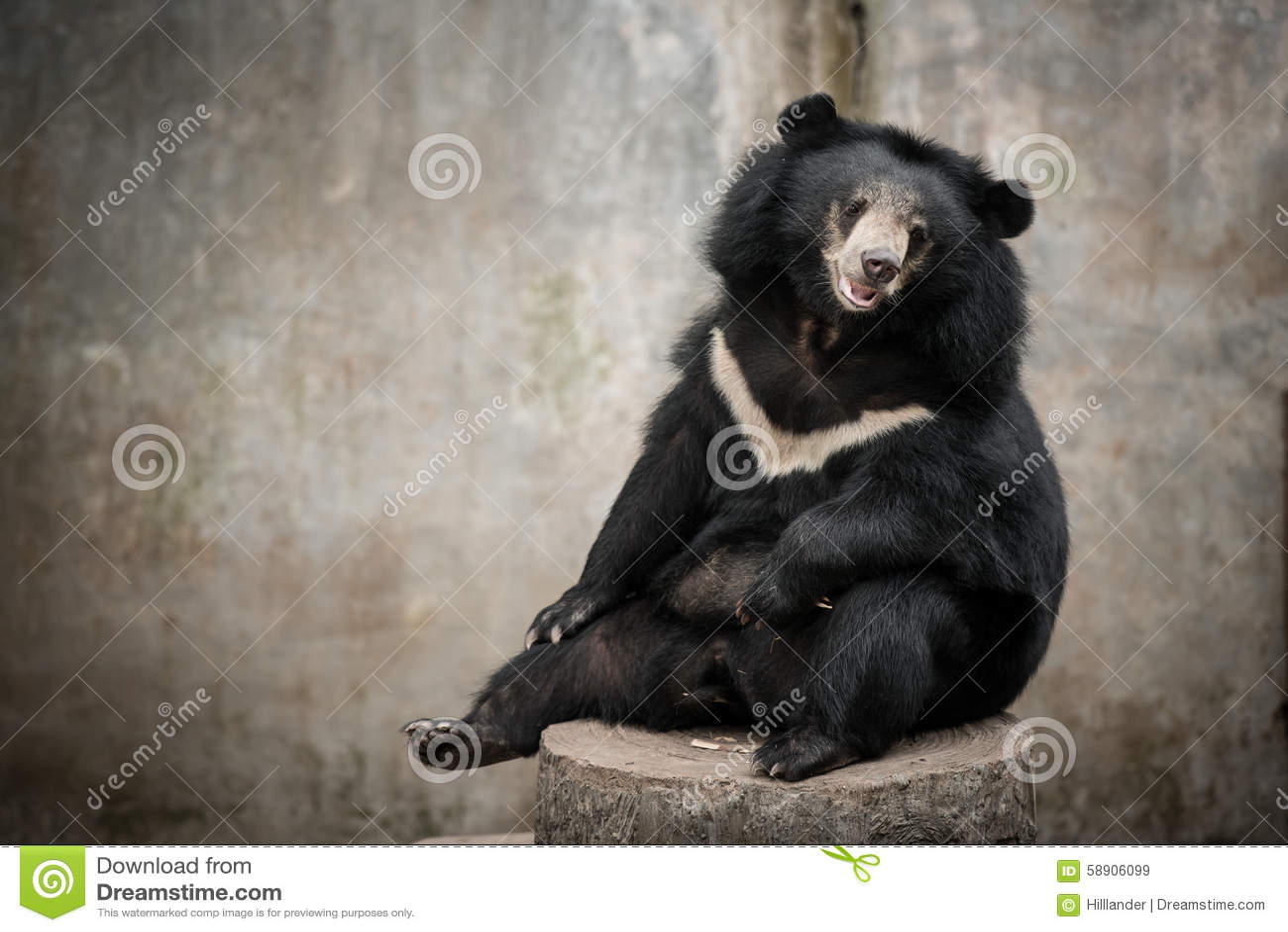 Can asian bear black opinion