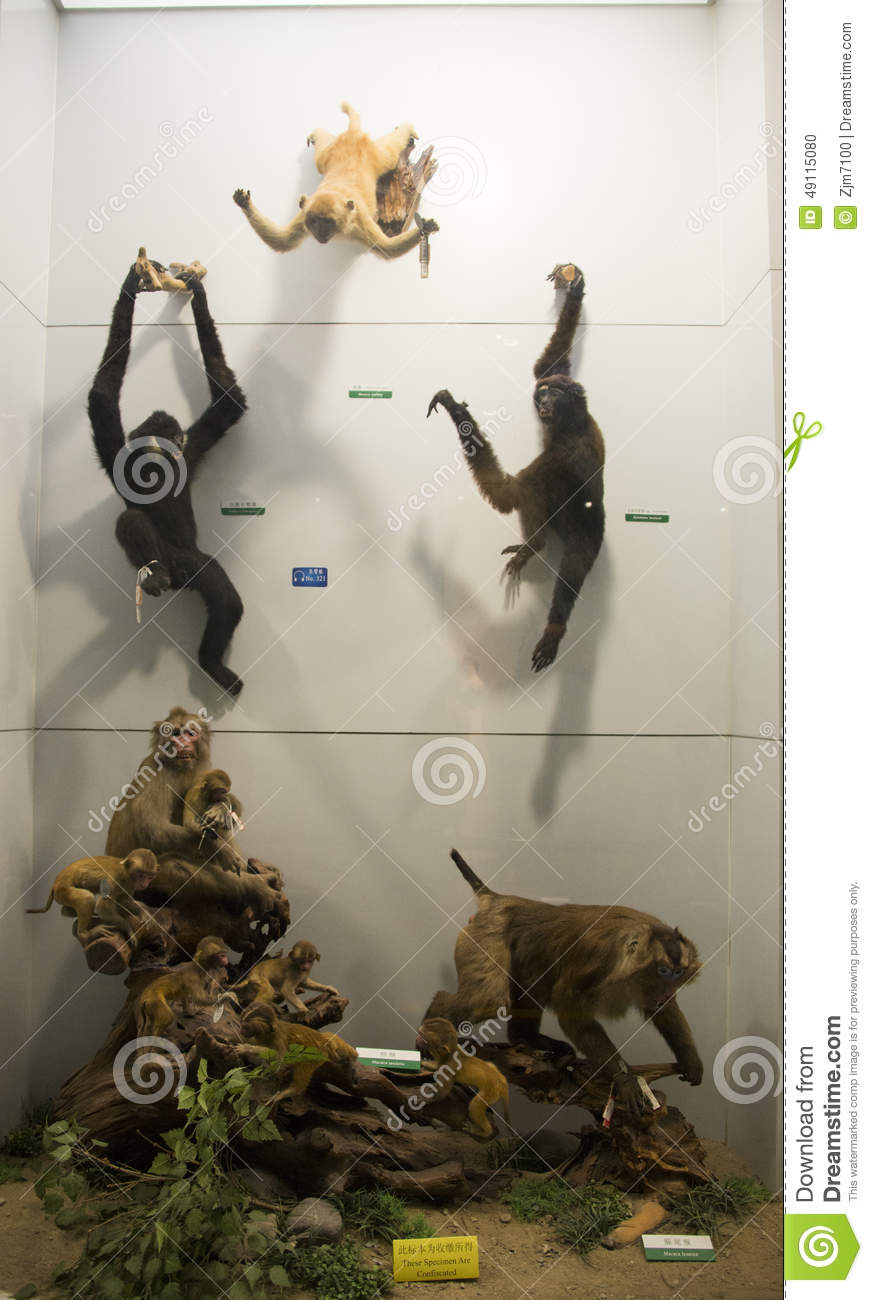 Asian China, Beijing, National Animal Museum,Animal specimens