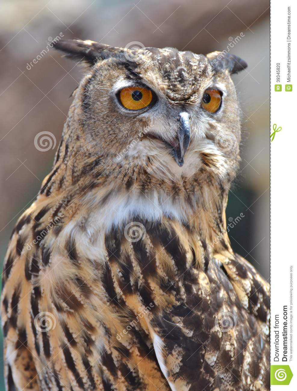 Related Keywords Suggestions Barred Owl Eyes Long Tail Keywords ...