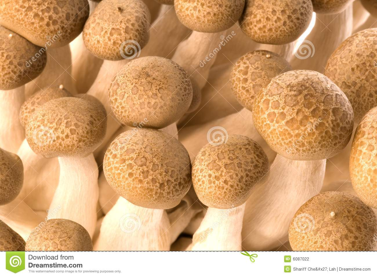 Asian edible Buna Shimeji mushrooms, alson known as Brown Beech or ...