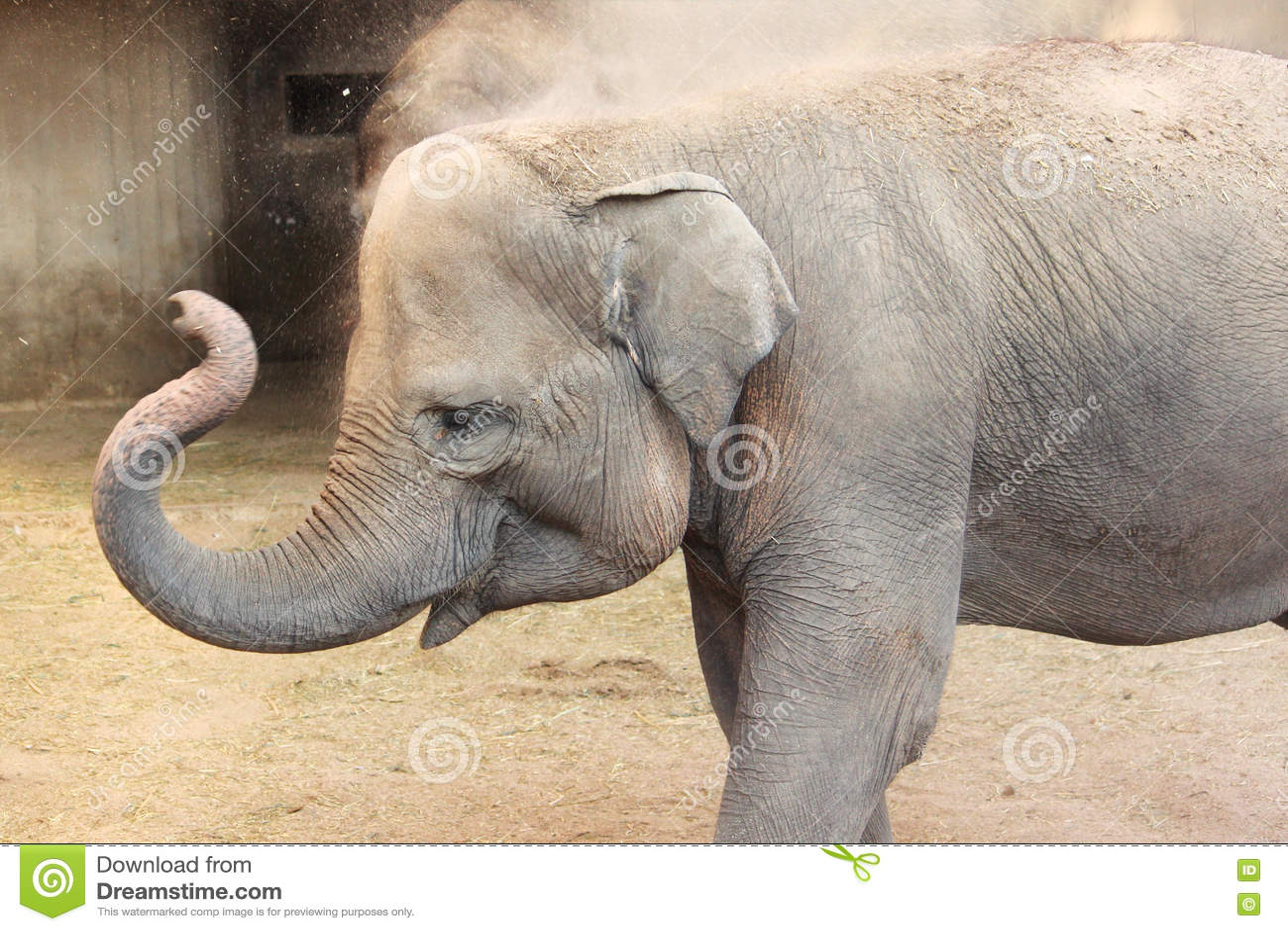 Elephant Nature Park Children S Book