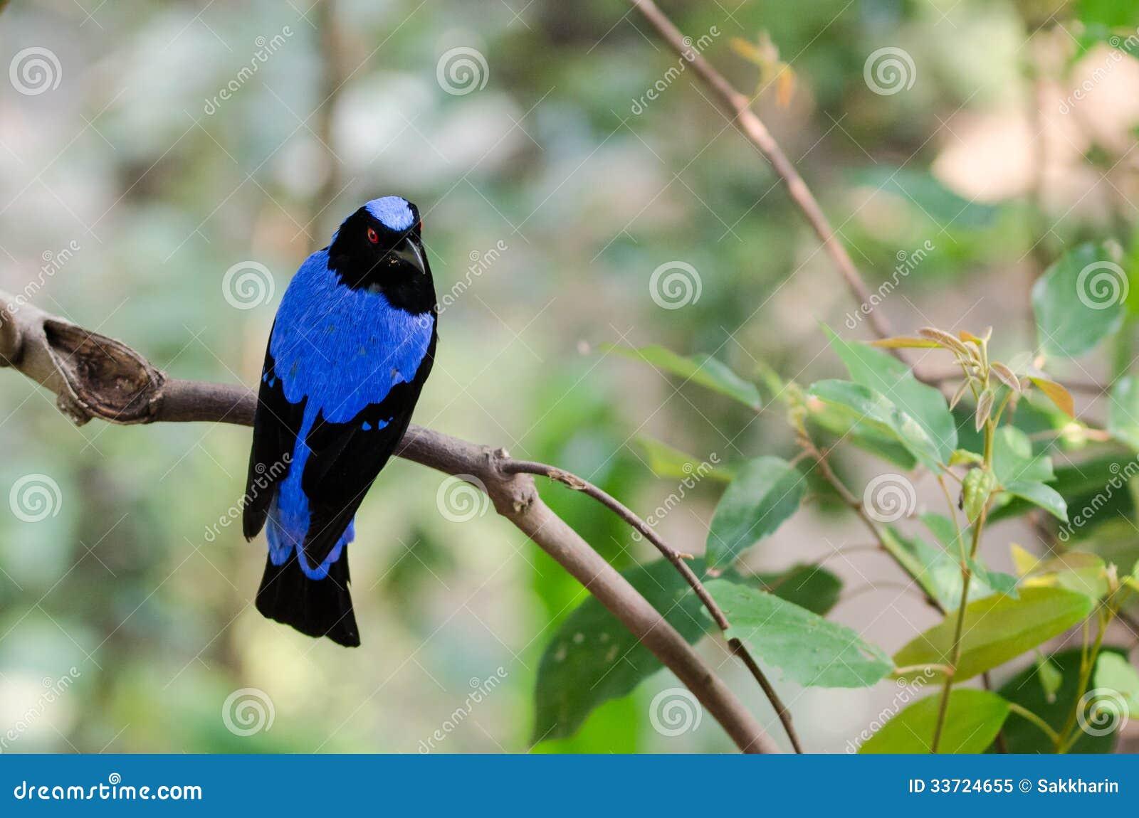 Bluebird nude Nude Photos 47