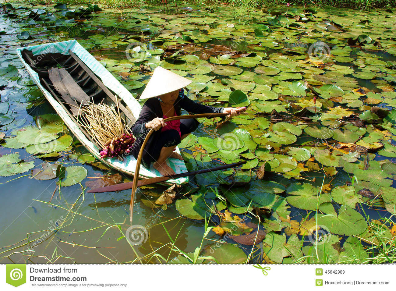 Asian Farmer, Pick Water Lily, Vietnamese Food Editorial ...
