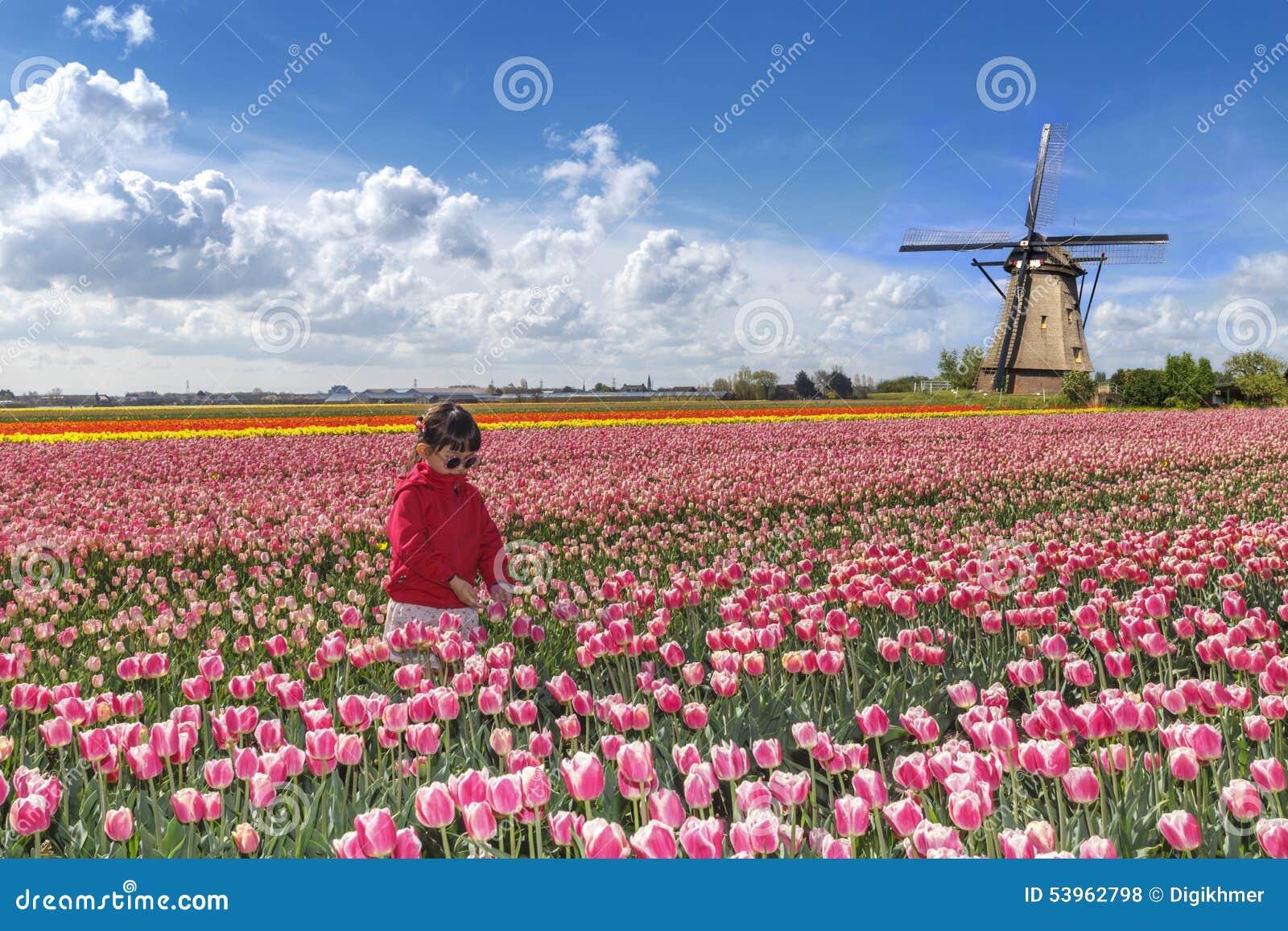 Asian farmer in a tulips farm