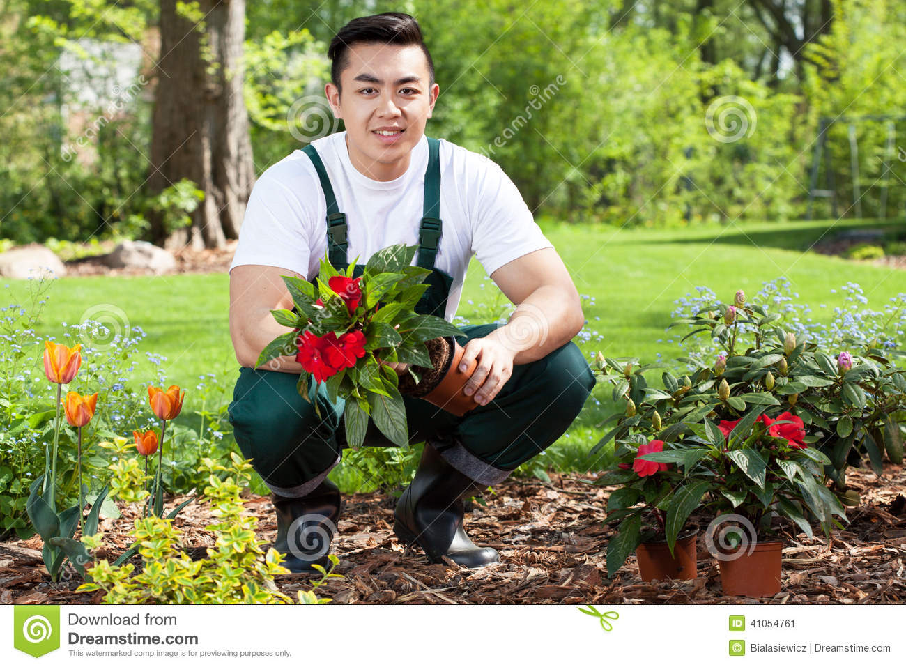 Asian gardener planting flowers stock photo image 41054761 - Flowers planted may complete garden ...