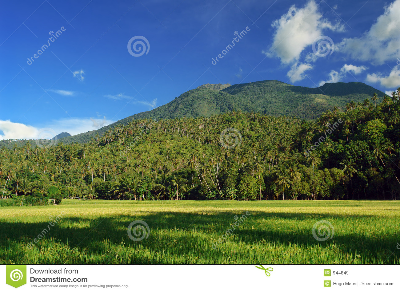 Asian landscape with mountains and rice field.