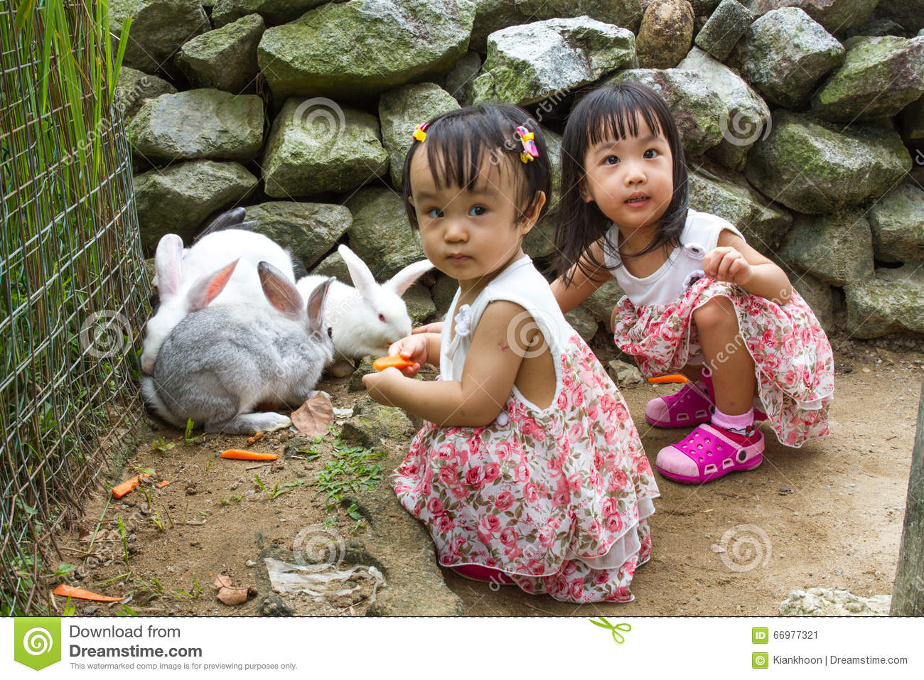 Asian Little Chinese Girls Feeding Rabbit with Carrot