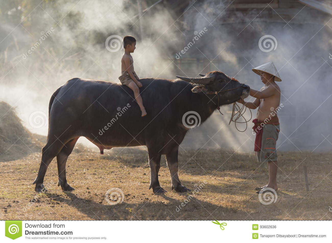Asian local boy sitting on buffalo with father,countryside Thailand