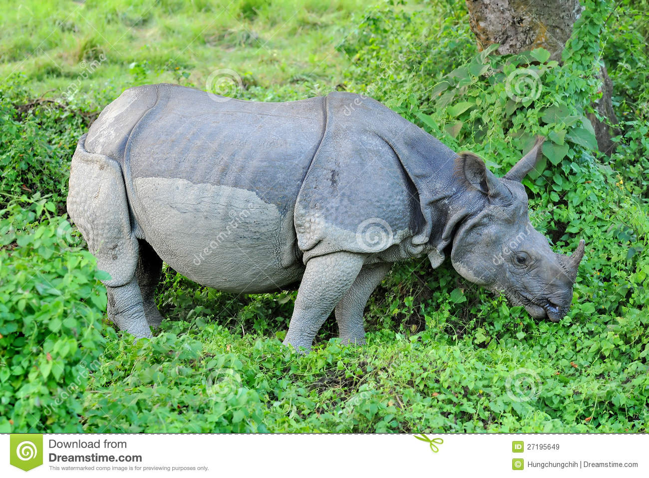Asian one horned rhino remarkable