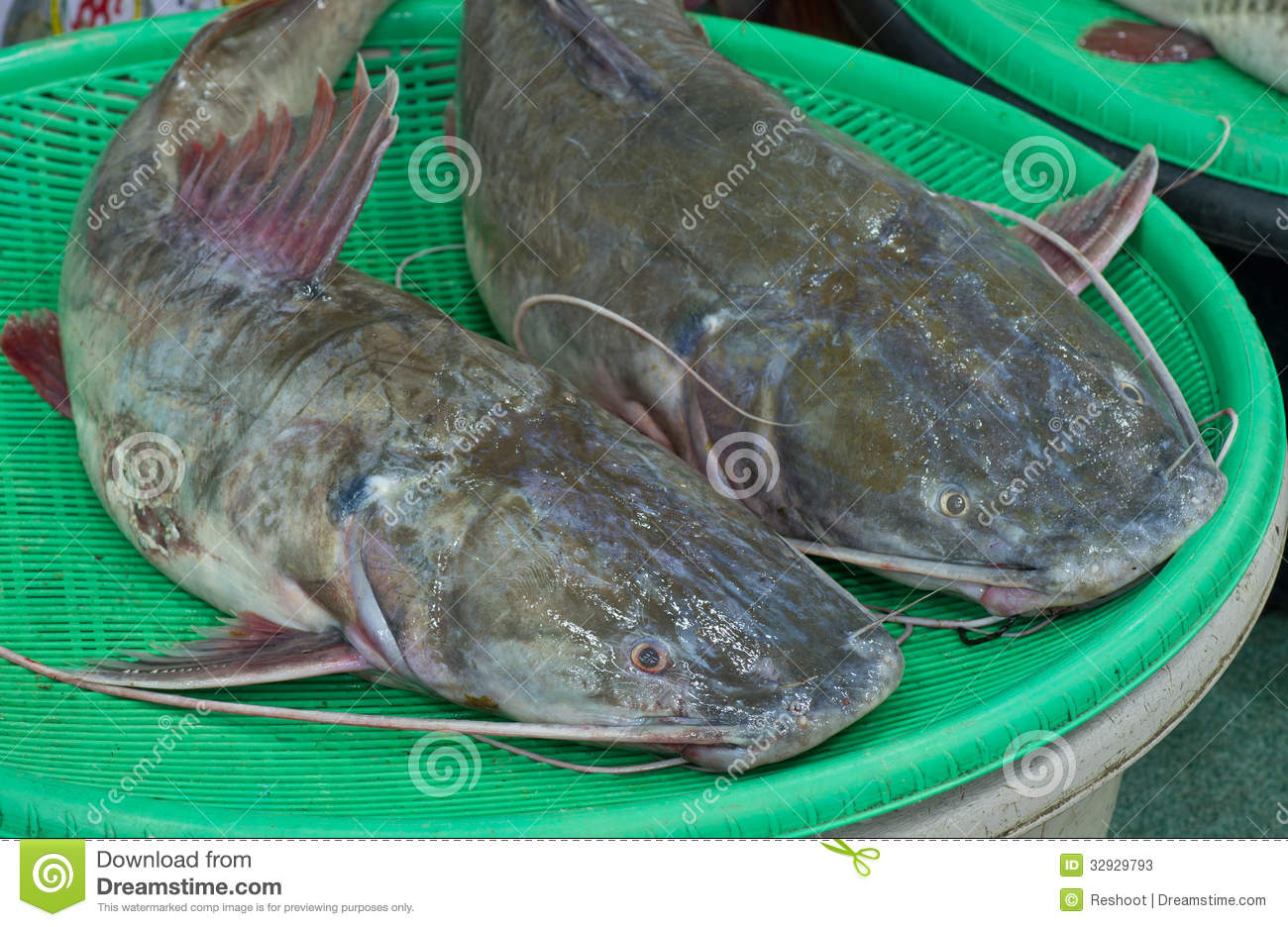 Asian redtail catfish sale at local market,Thailand (Hemibagrus ...
